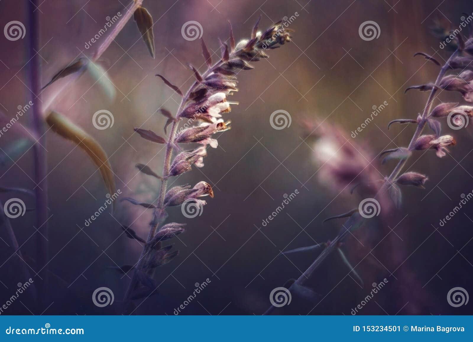Schönes Bild von wilden Blumen auf einem purpurroten Sonnenuntergang Landschaft mit Wildflowers Sonnenuntergangblumenhintergrund