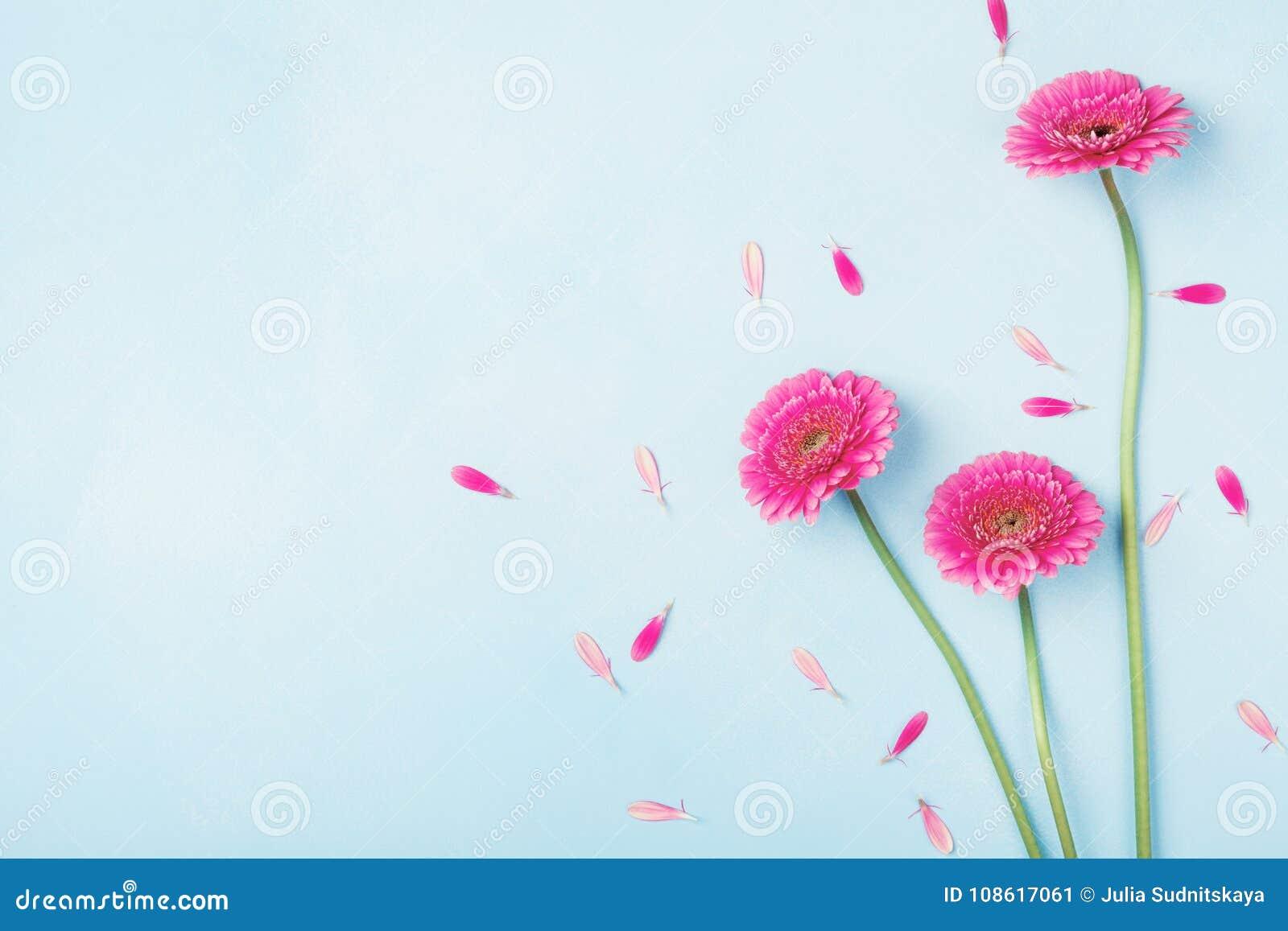 Schönes Frühlingsrosa blüht auf blauer Pastelltischplatteansicht Rosafarbener Blumenrand flache Lageart