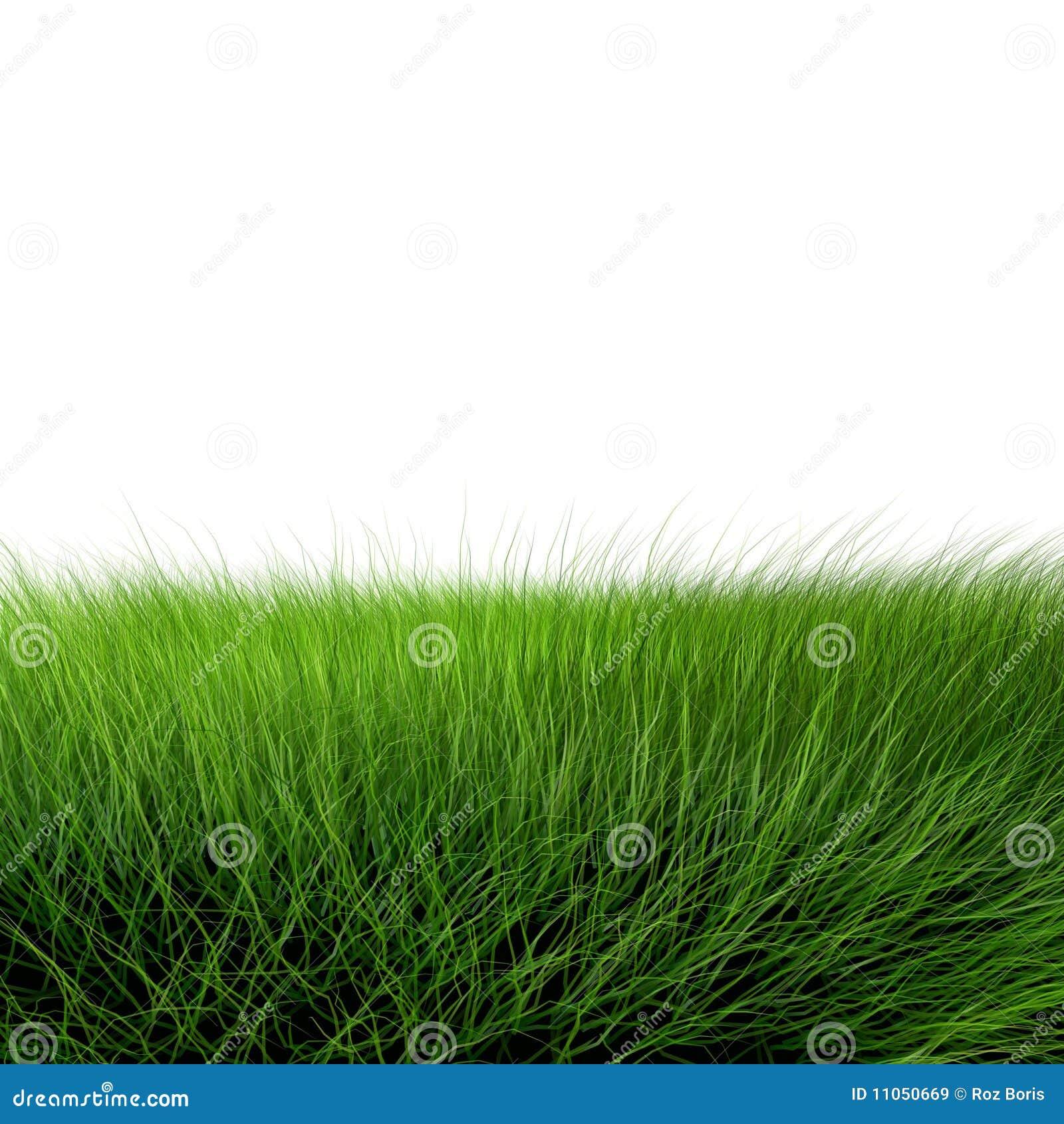 Schönes grünes Gras