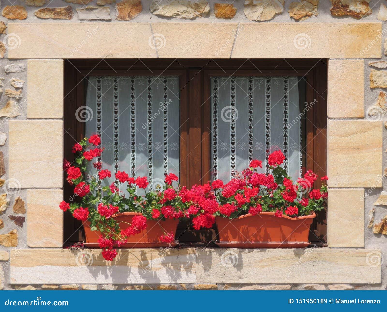 Schönes hölzernes Fenster verziert mit roten Blumen von intensiven Farben