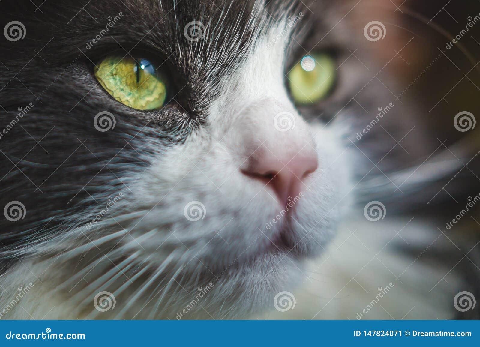Schönes Katzenauge