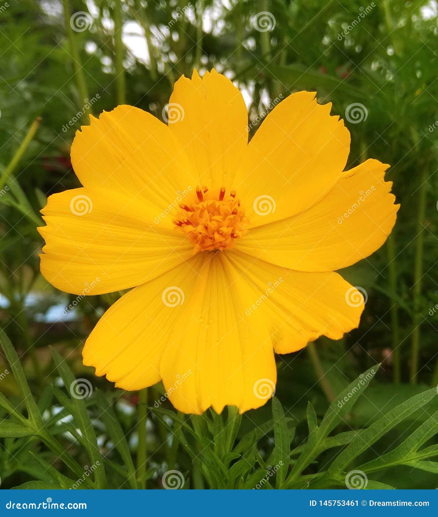 Schönes Landschaftsbild von gelben Blumen und passend für Tapeten