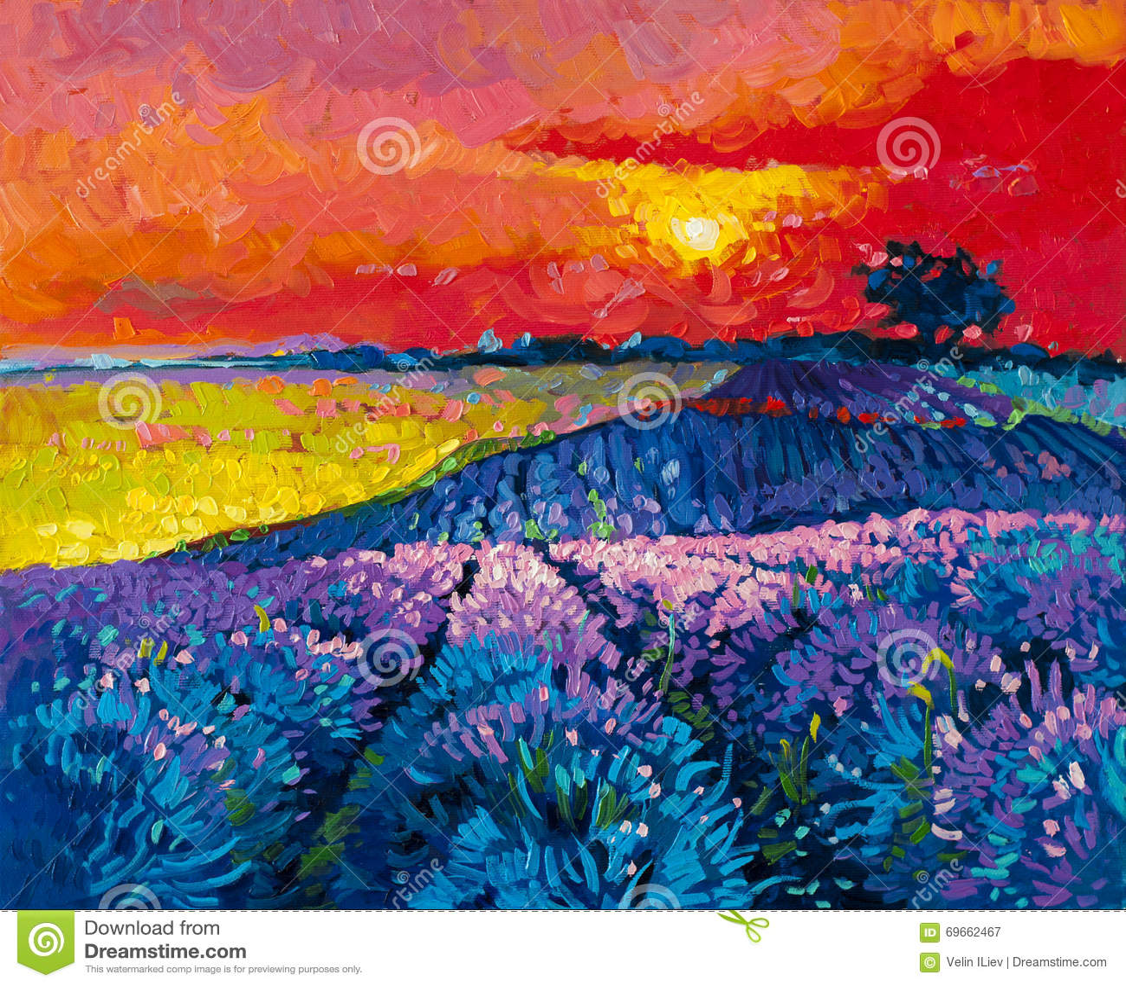 Schönes Lavendelfeld bei Sonnenuntergang