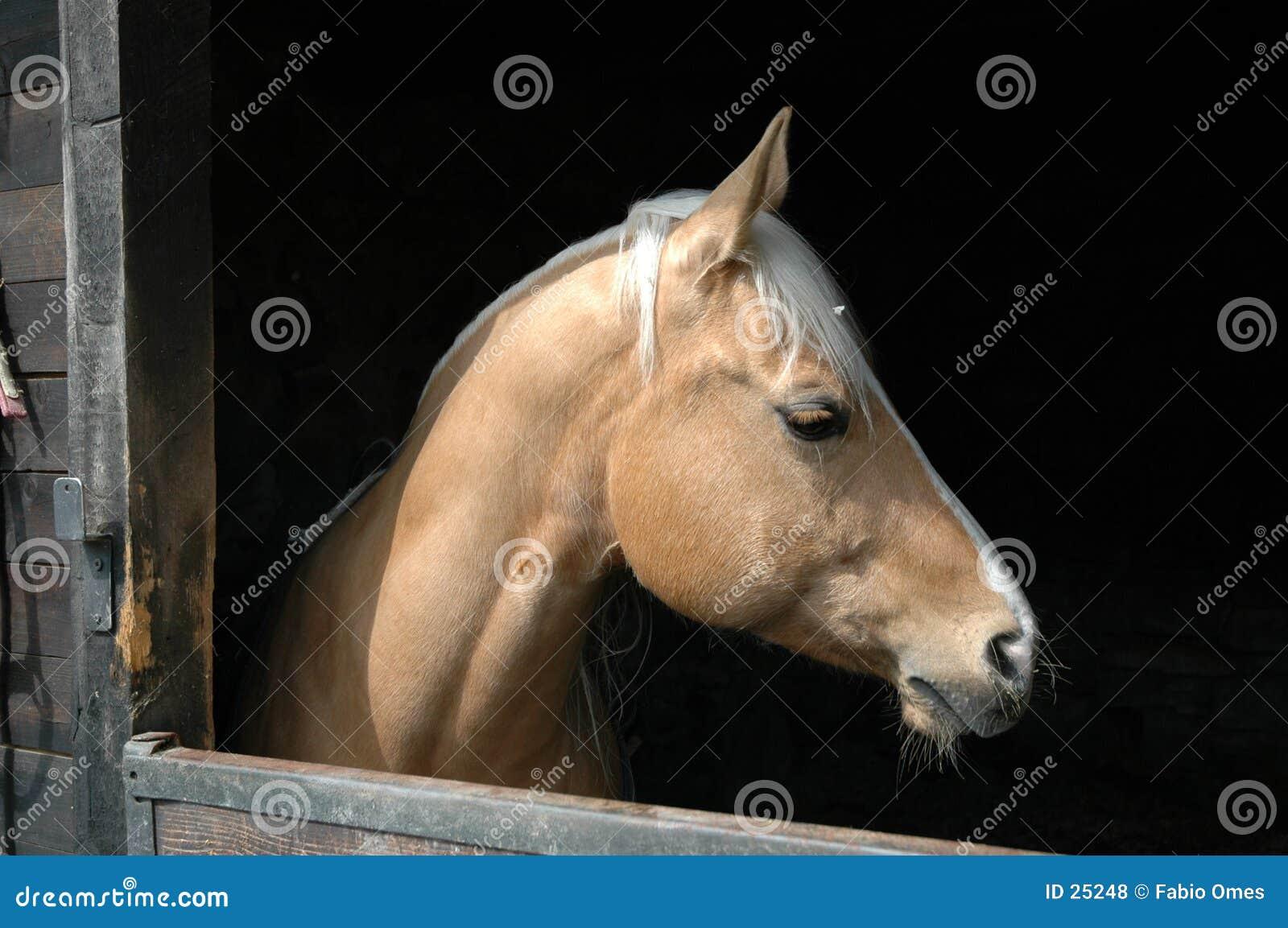 Schönes Pferd.
