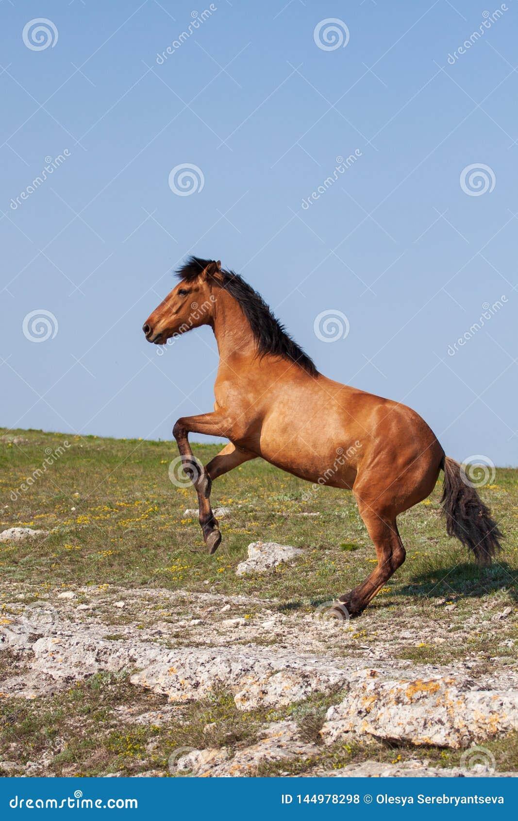 Schönes rotes Pferd, das oben am sonnigen Tag im Sommer aufrichtet