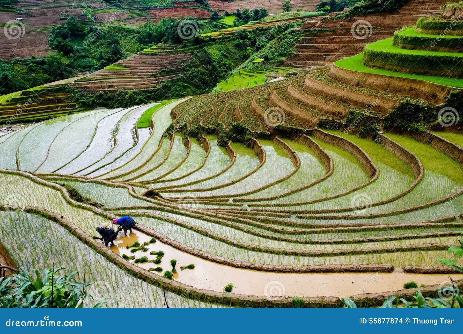 Schönes terassenförmig angelegtes Reisfeld in MU Cang Chai, Vietnam