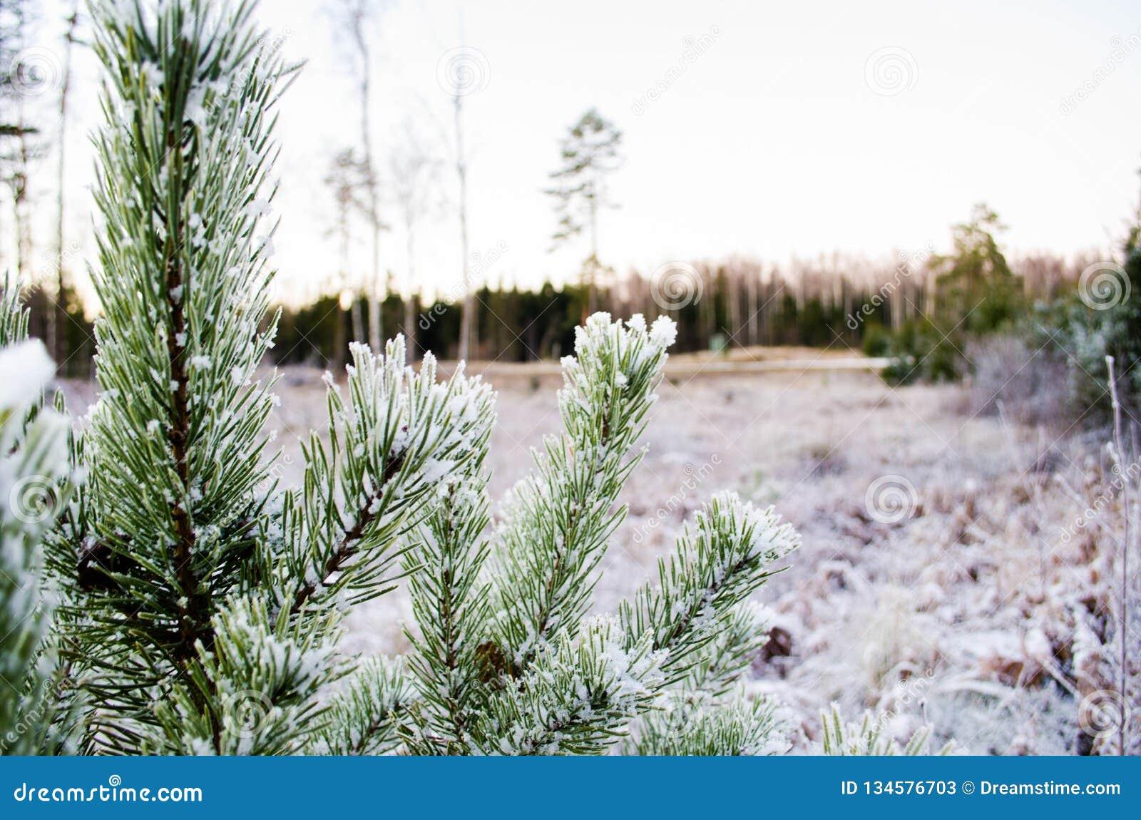 Schönheit der Winterfarben Otanki, Lettland
