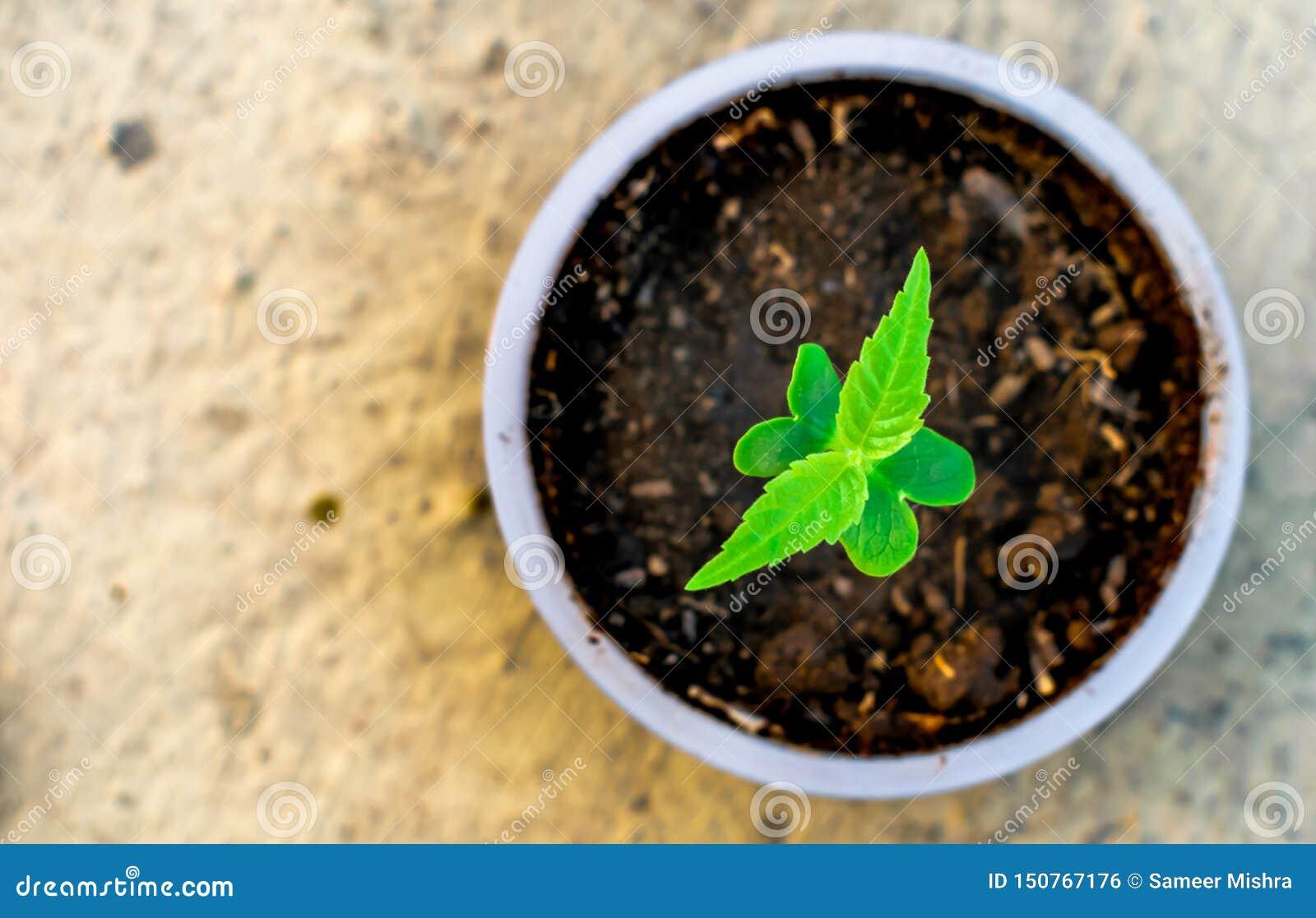 Schössling, der in einem Schalenbodengrün-Naturschutz der erde wächst