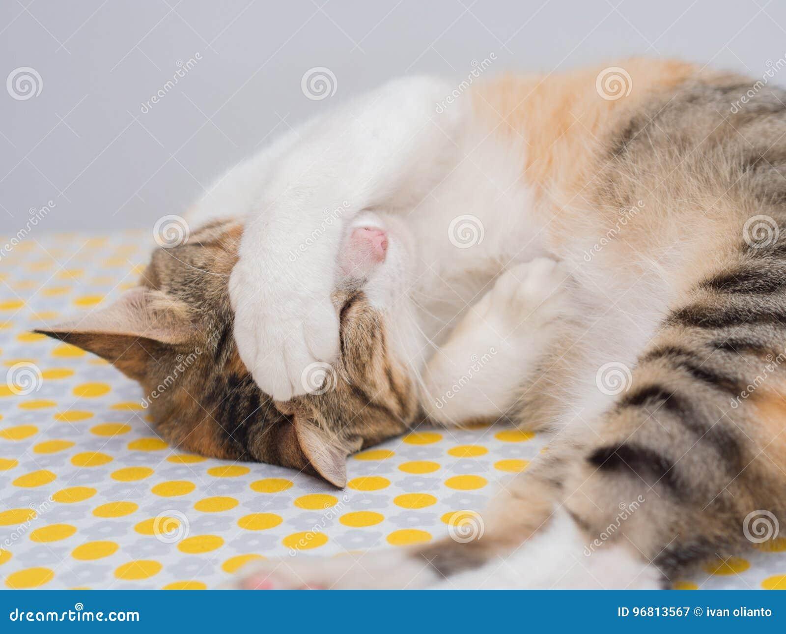 Schuchterne Katze Auf Bett Stockbild Bild Von Verstecken 96813567