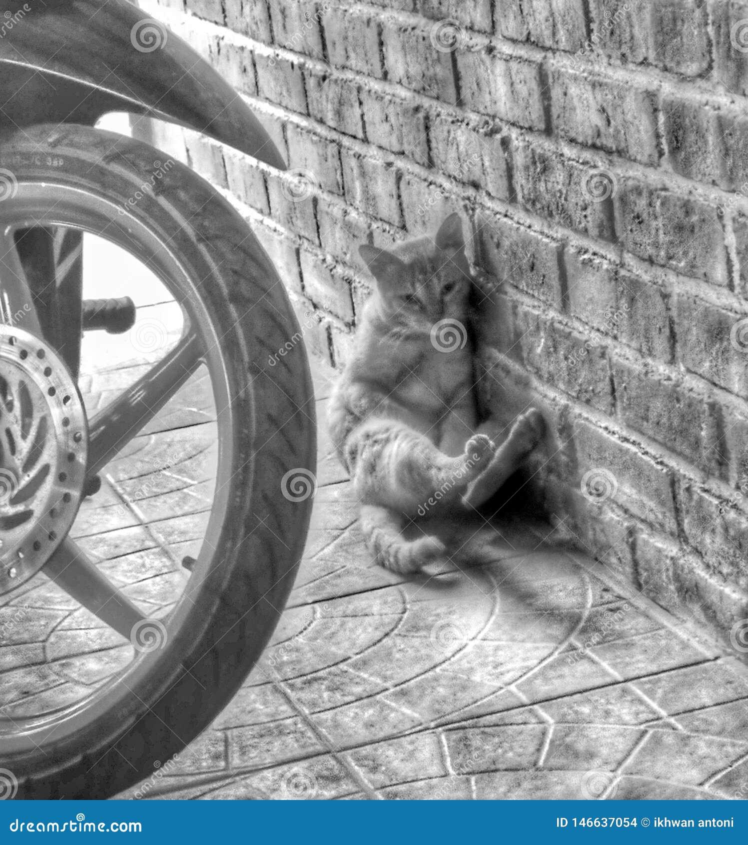 Schüchterne schüchterne Katze neben der Wand