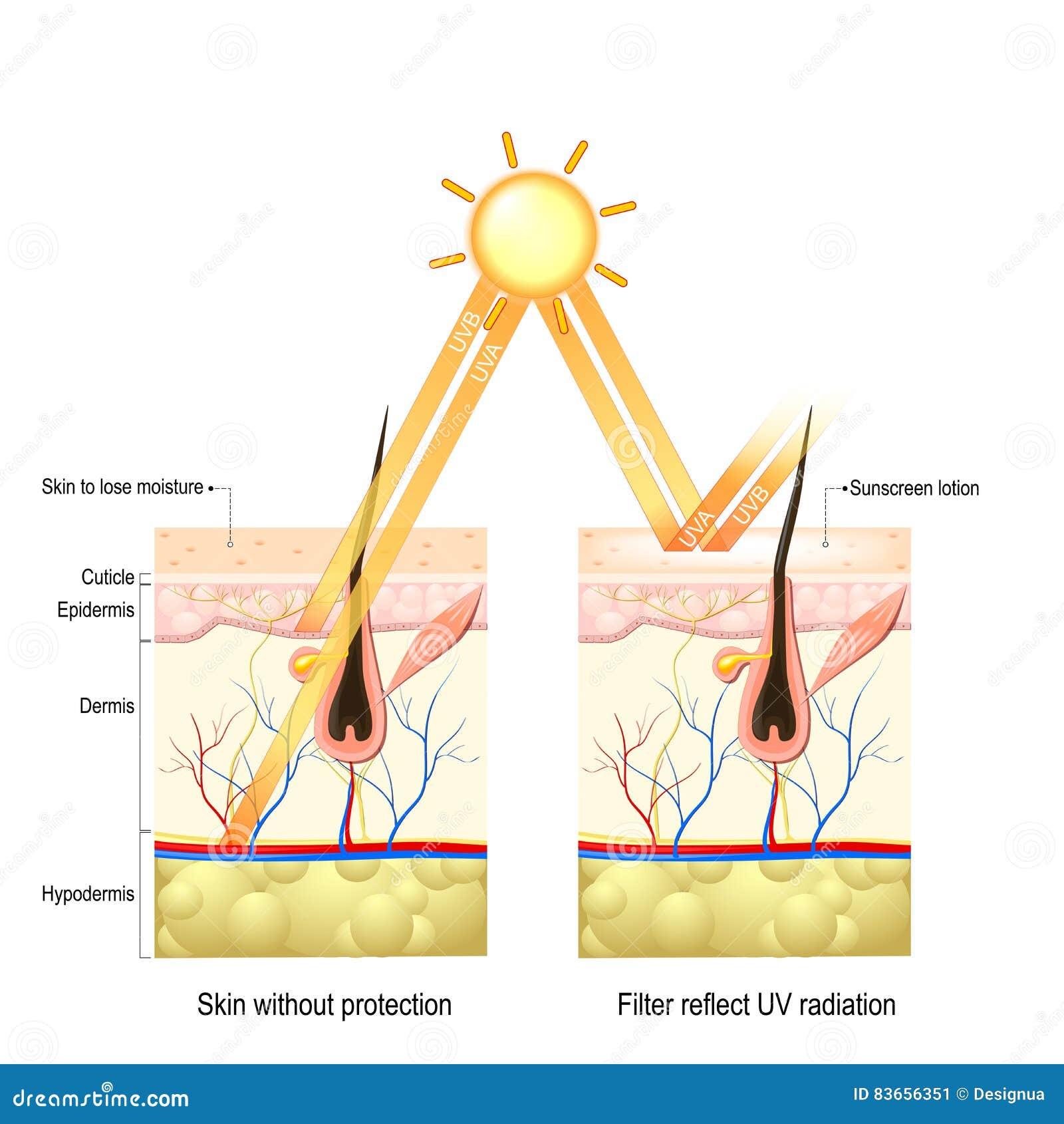 UVB- und UVA-Strahlung vektor abbildung. Illustration von schichten ...