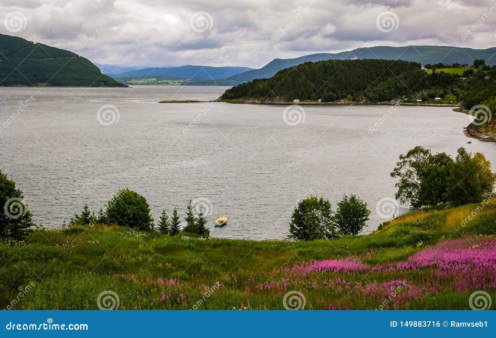 Sch?ne Fjordk?ste in Norwegen an einem Sommertag In den Vordergrundblumen