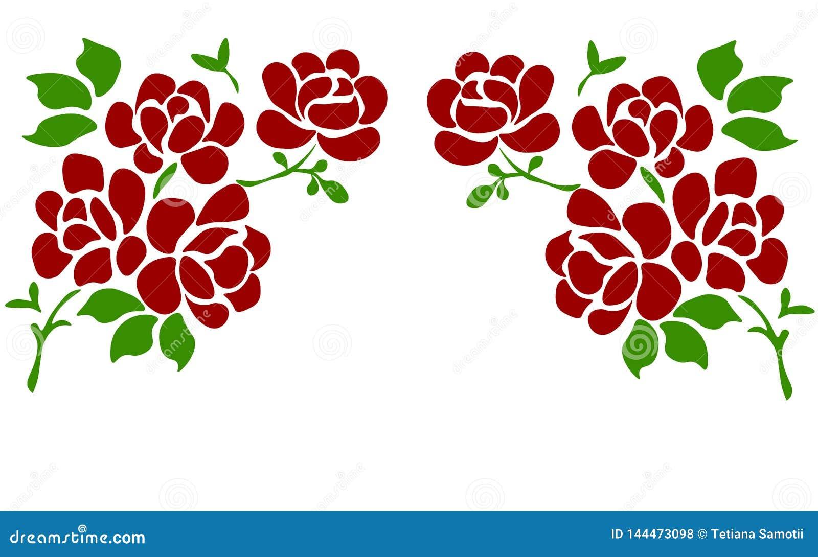 Sch?ne Rose lokalisiert auf Wei? Vervollkommnen Sie f?r Hintergrundgru?karten und Einladungen der Hochzeit, Geburtstag, Valentins