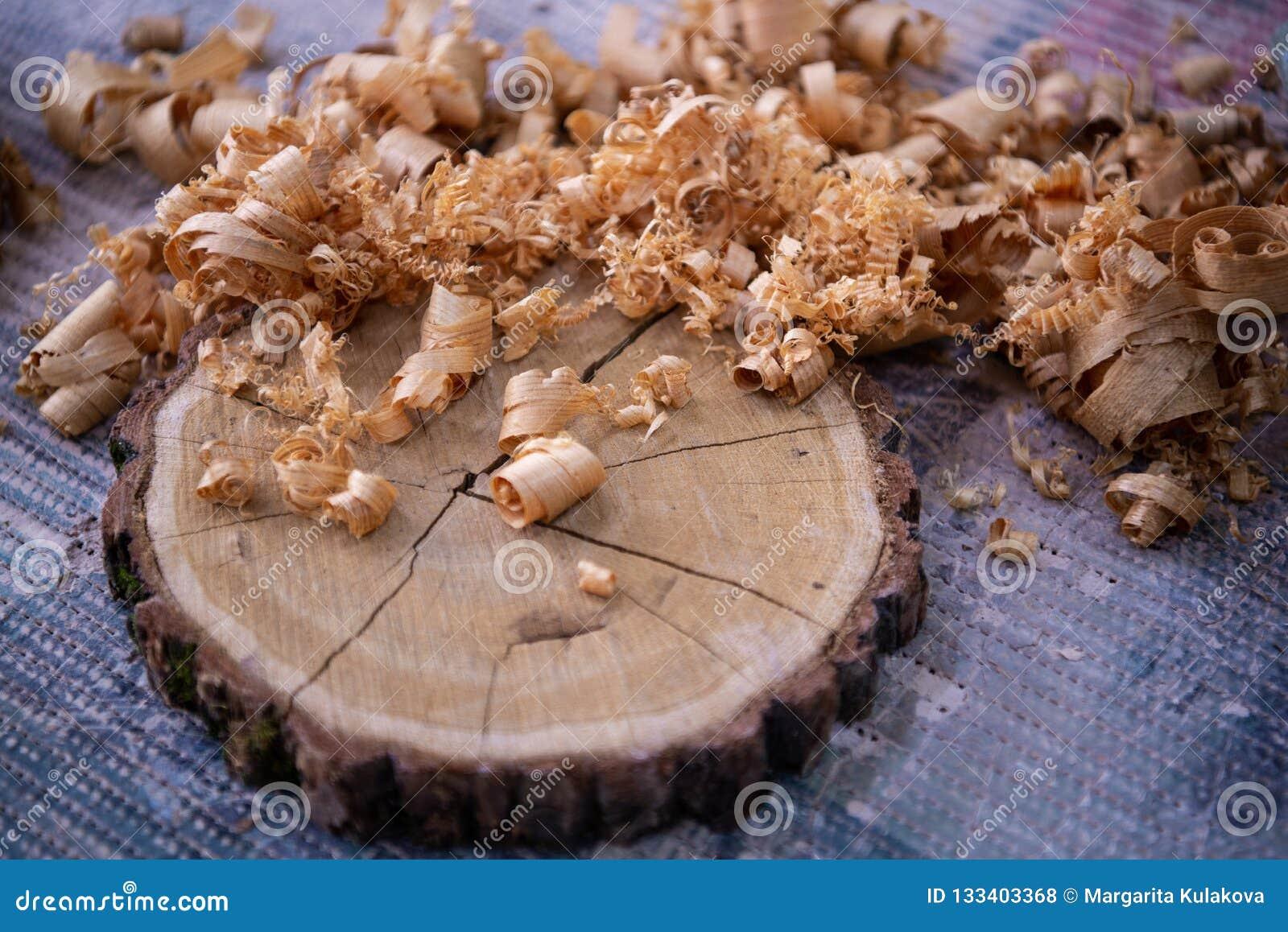 Schaafsel en Lijkwitte boomdwarsdoorsnede op de werkbank dichte omhooggaand van de timmerman: houtbewerking en timmerwerkconcept