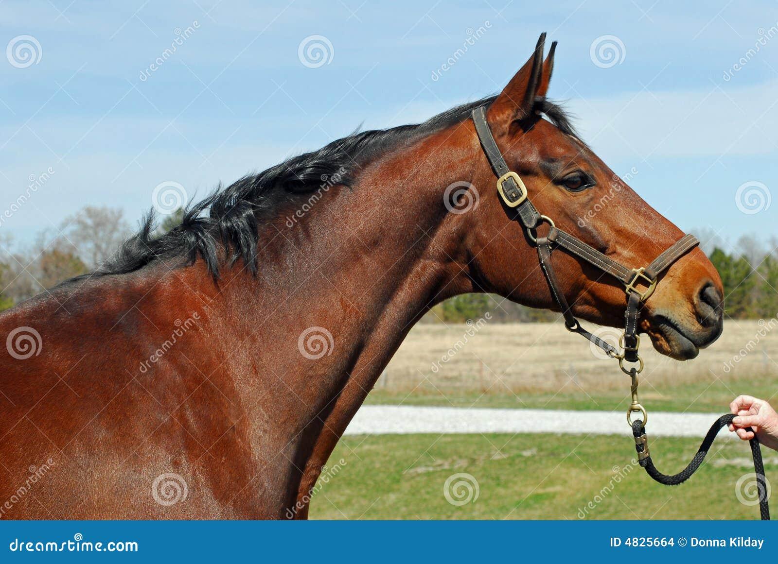 Schacht-Pferd