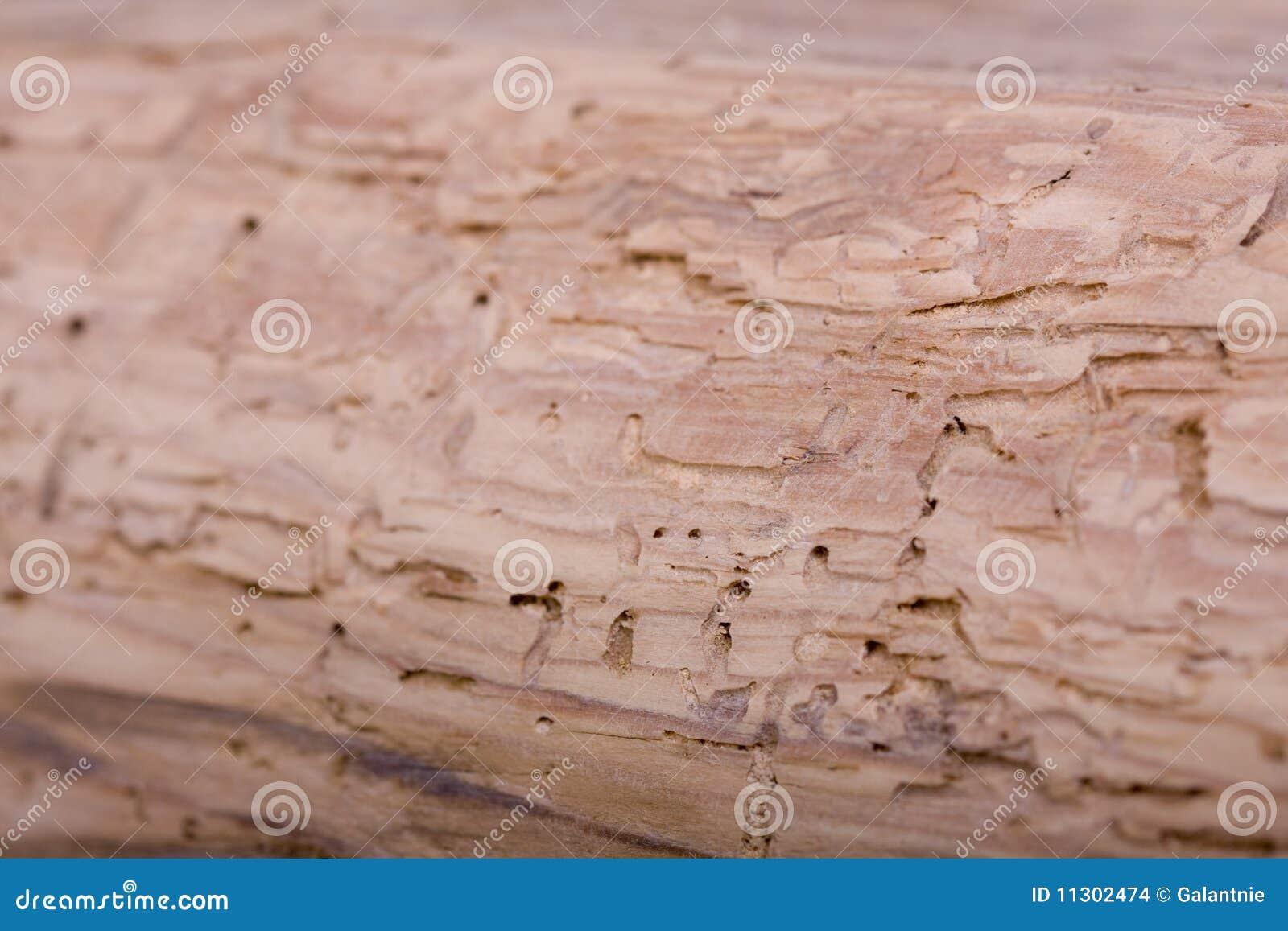 Schadenholz