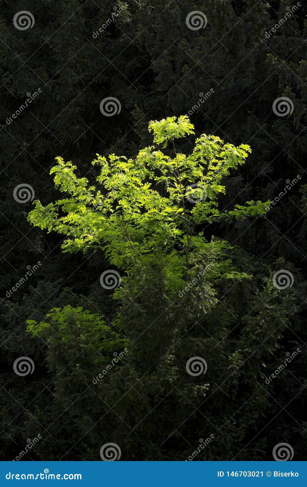 Schaduwen van groene kleur