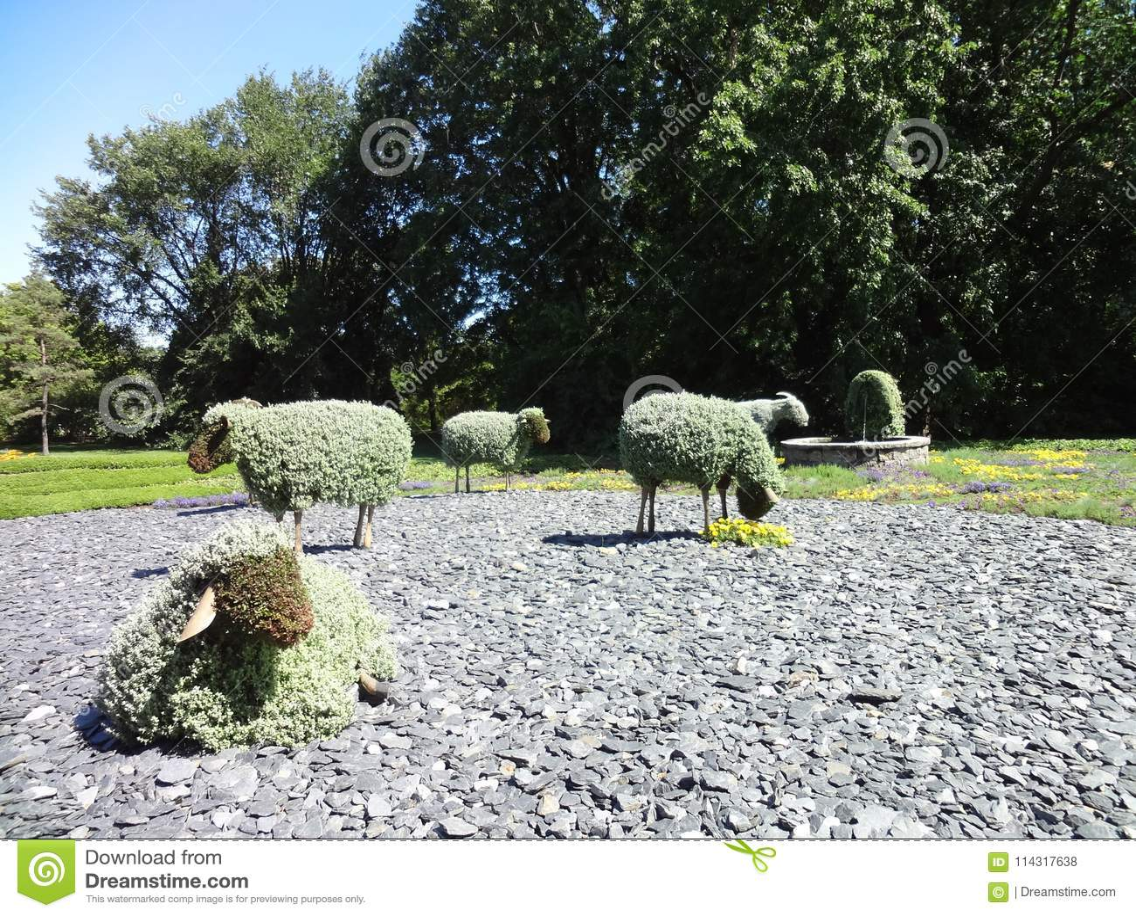 Schafe Botanischer Garten von Montreal Kanada