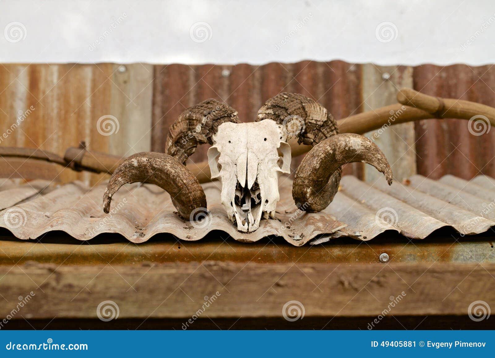 Download Schafschädel mit Hörnern stockbild. Bild von kunst, lamm - 49405881