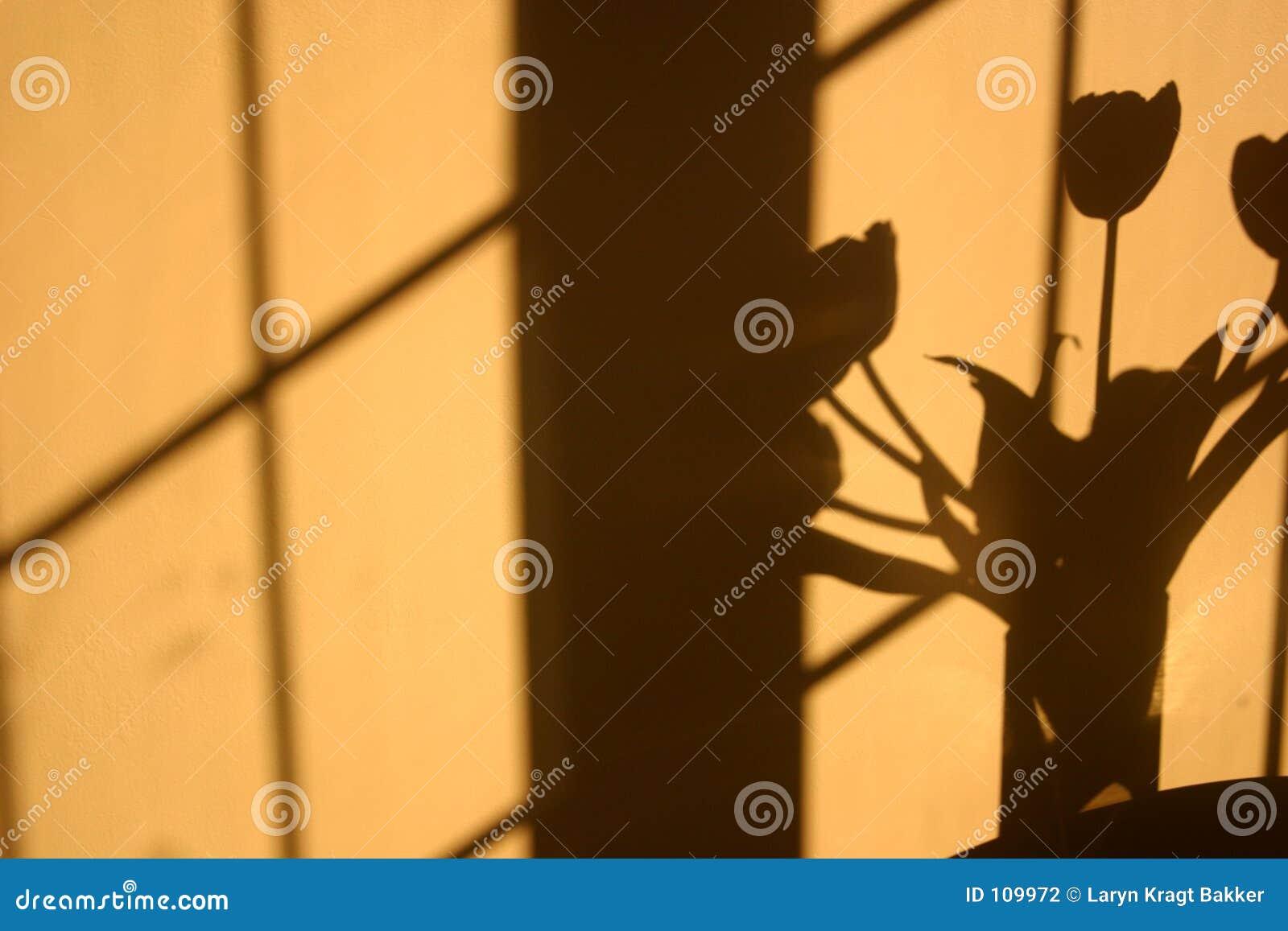 Schatten der Tulpeblumen auf Wand
