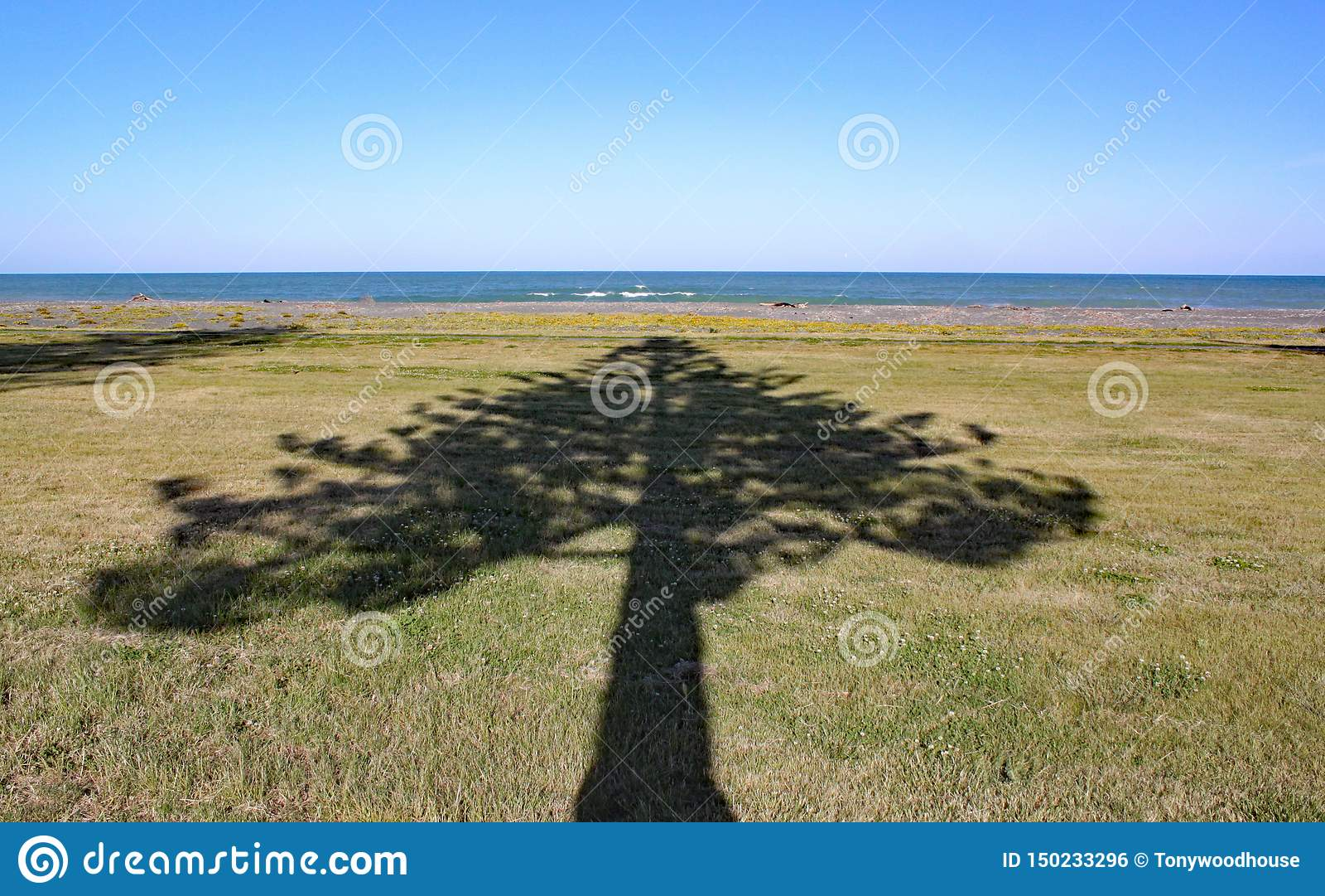 Schatten von Punkten eines Baums zum Meer in Napier auf Nordinsel, Neuseeland
