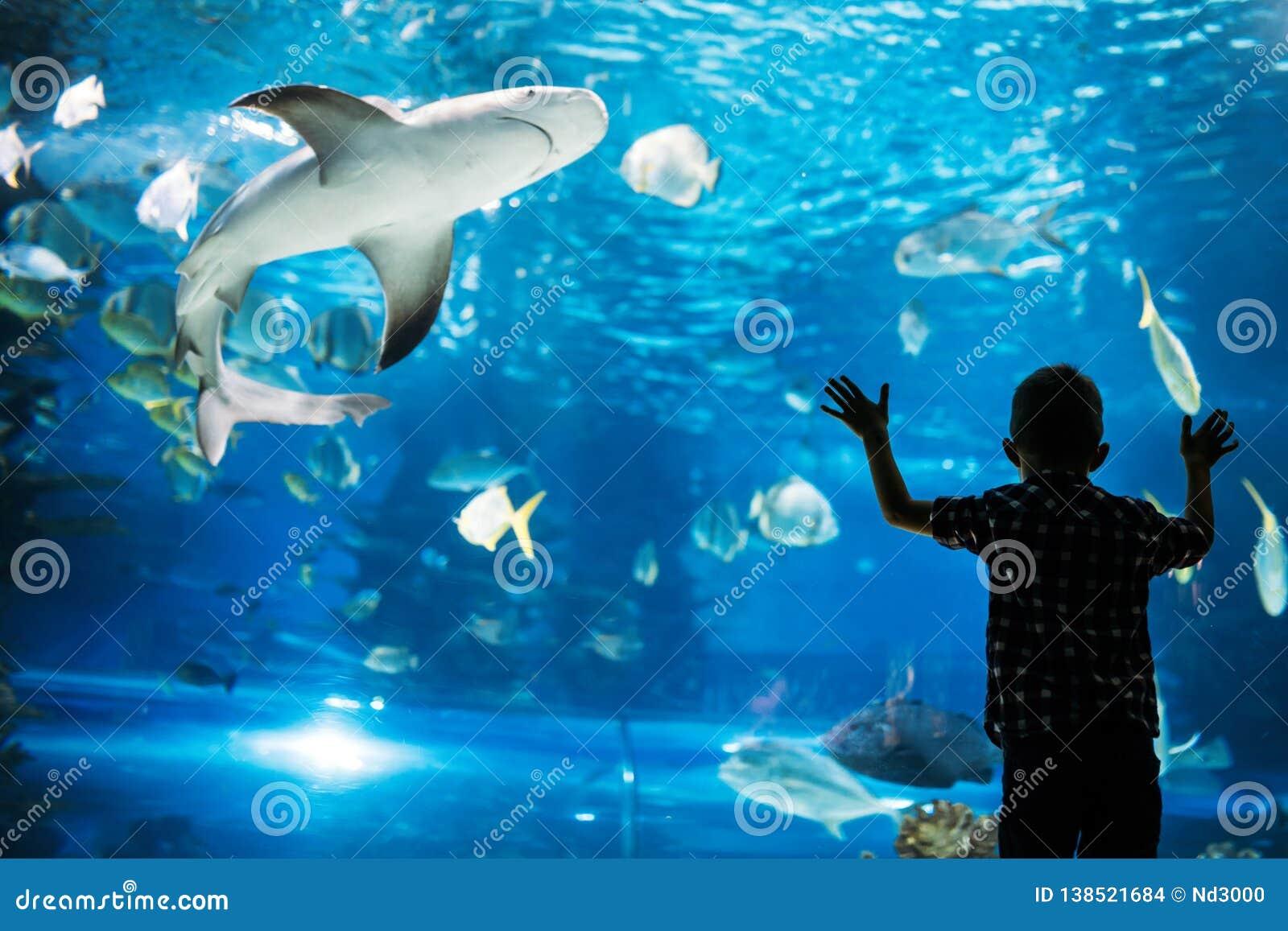 Schattenbild eines Jungen, der Fische im Aquarium betrachtet