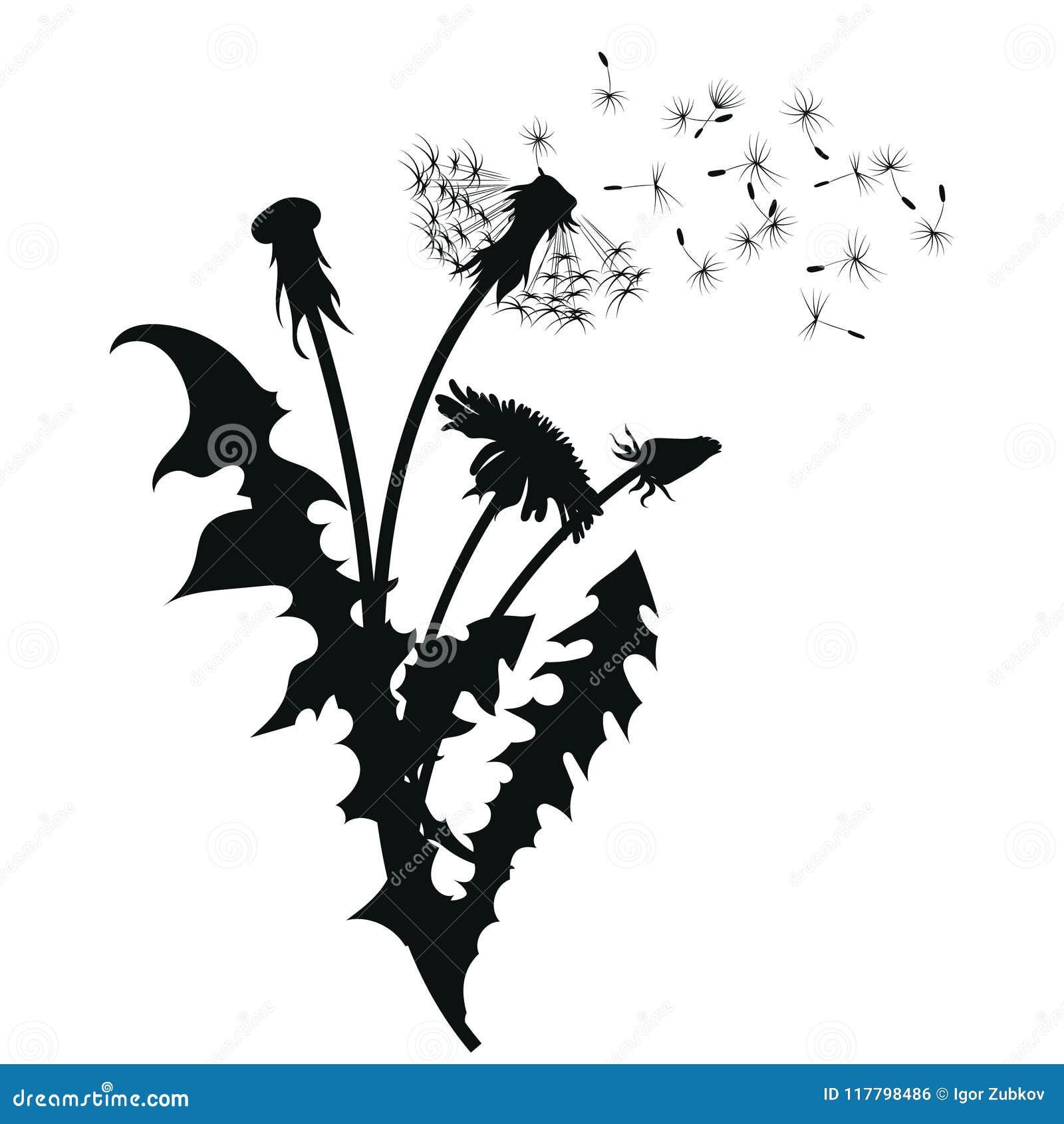 Schattenbild eines Löwenzahns mit Fliegensamen Schwarze Kontur eines Löwenzahns Schwarzweißabbildung einer Blume