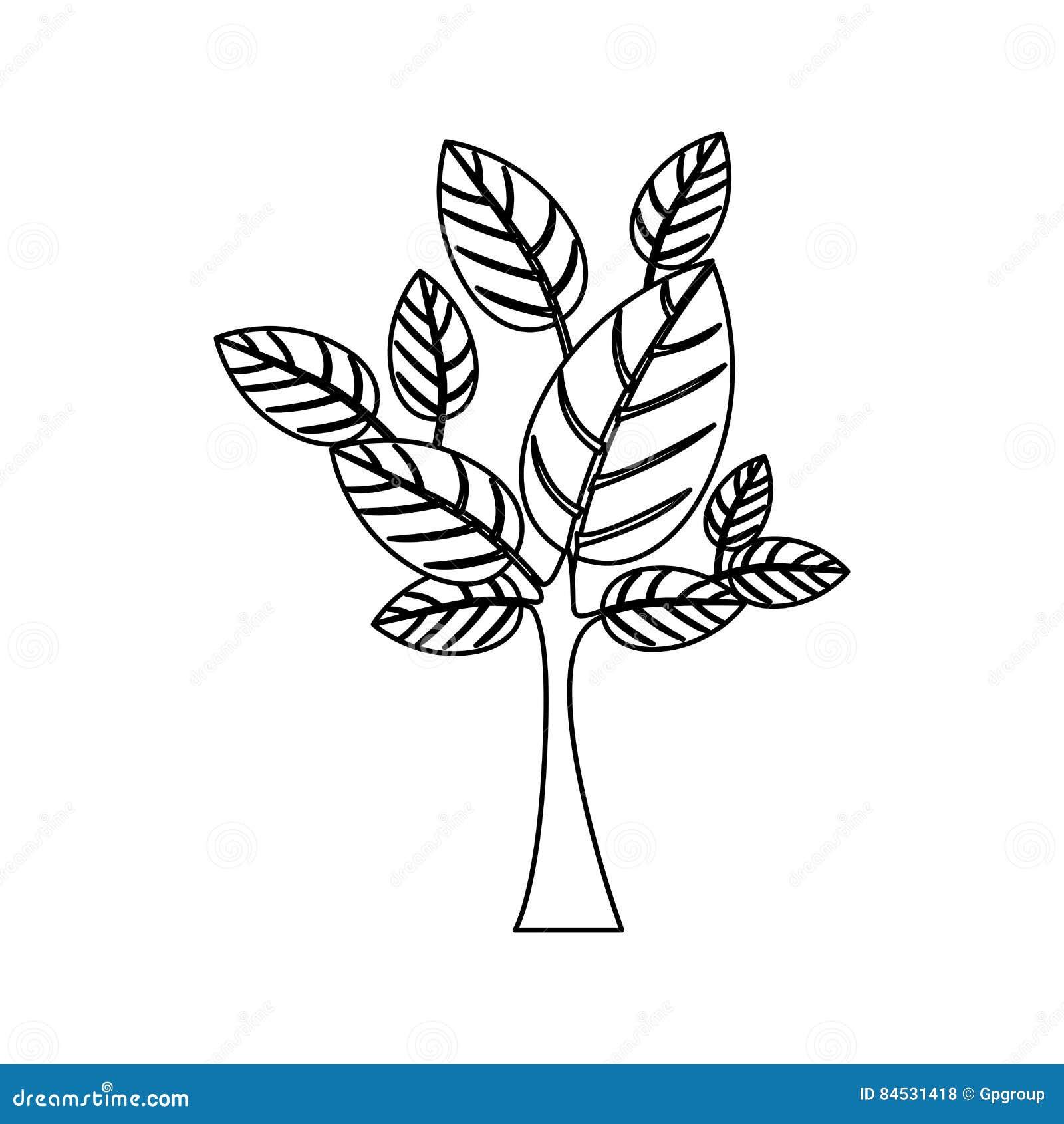 Schattenbild mit Blättern und Stamm