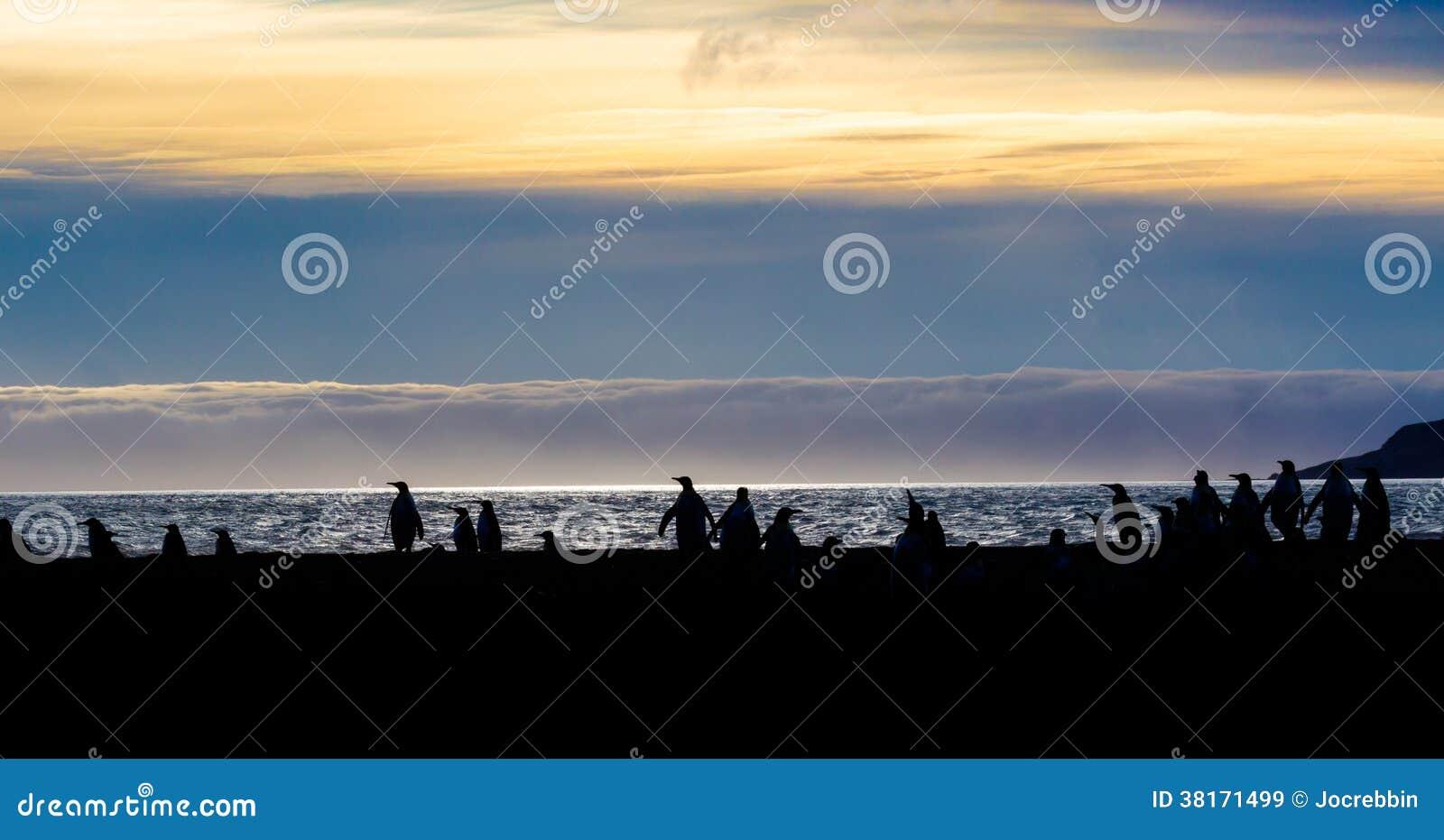 Schattenbild von König und gentoo pengins auf St Andrews bellen, Süd-Georgia Islands, bei Sonnenaufgang