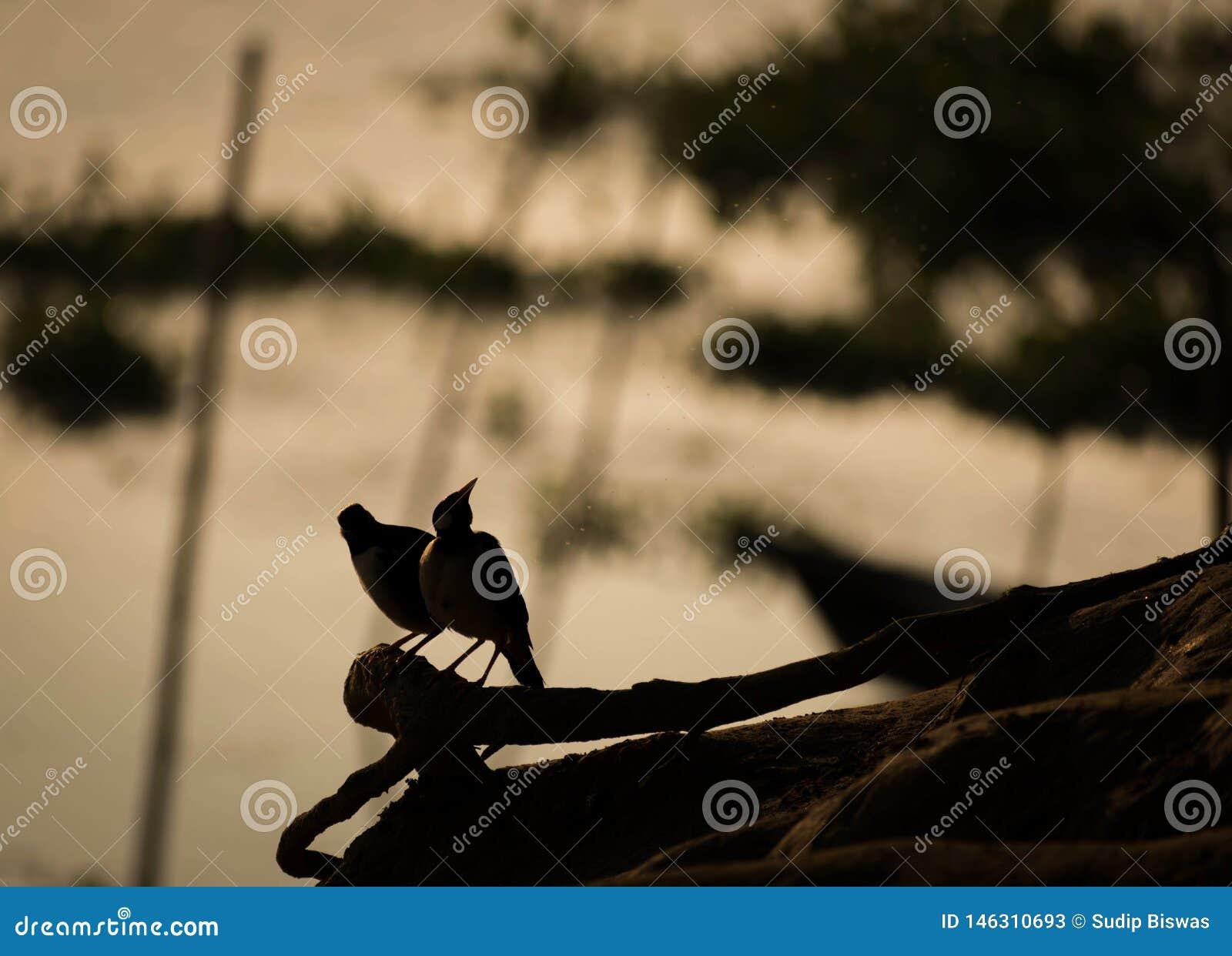Schattenbildbilder von V?geln