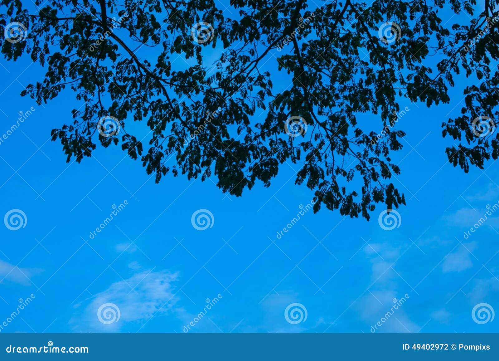 Download Schattenbildblattvordergrund Mit Blauem Himmel Stockfoto - Bild von sauerstoff, feuchtigkeit: 49402972