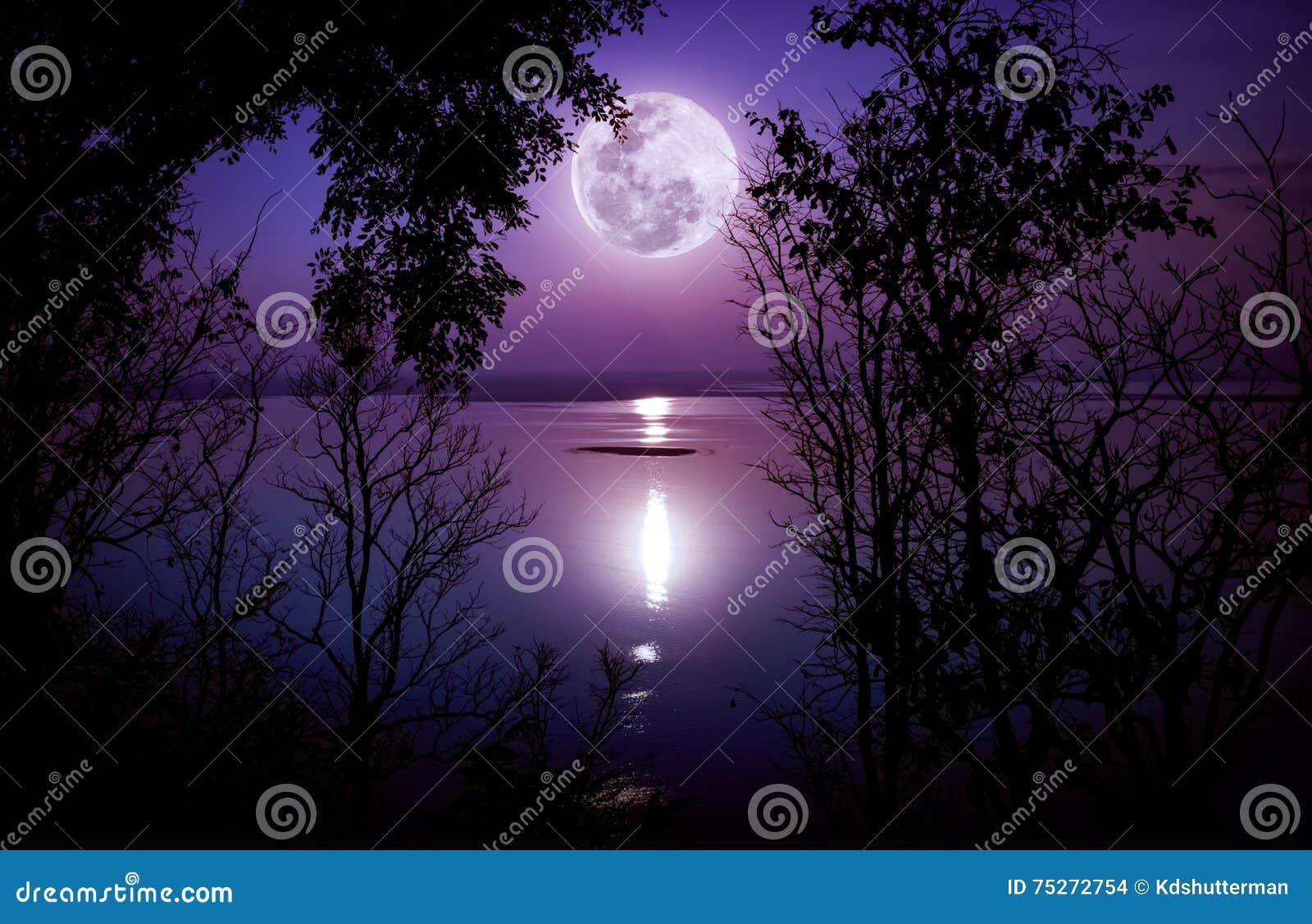 Download Schattenbilder Des Holzes Und Des Schönen Moonrise, Heller Vollmond Wo Stockfoto - Bild von halloween, mondschein: 75272754