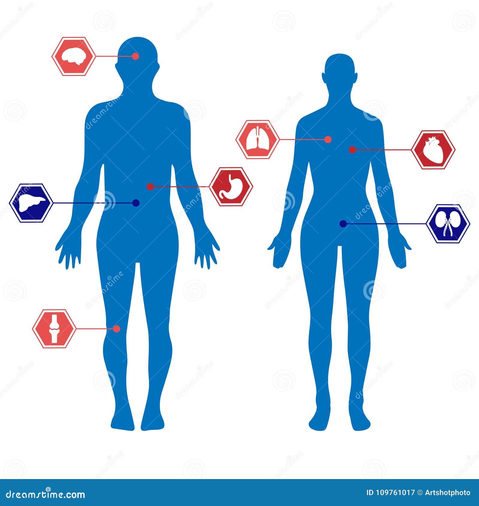 Schattenbilder Des Menschlichen Körpers Eines Mannes Und Der Frau ...