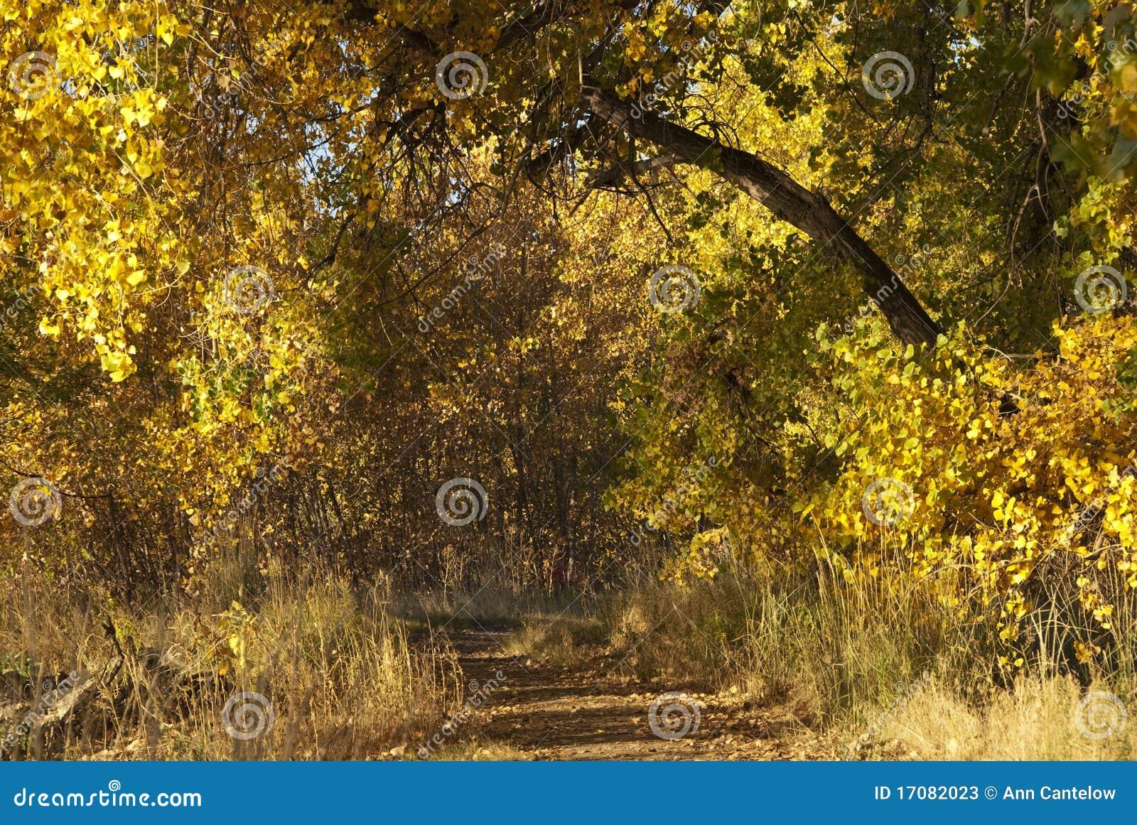Schattiger Pfad im Herbst