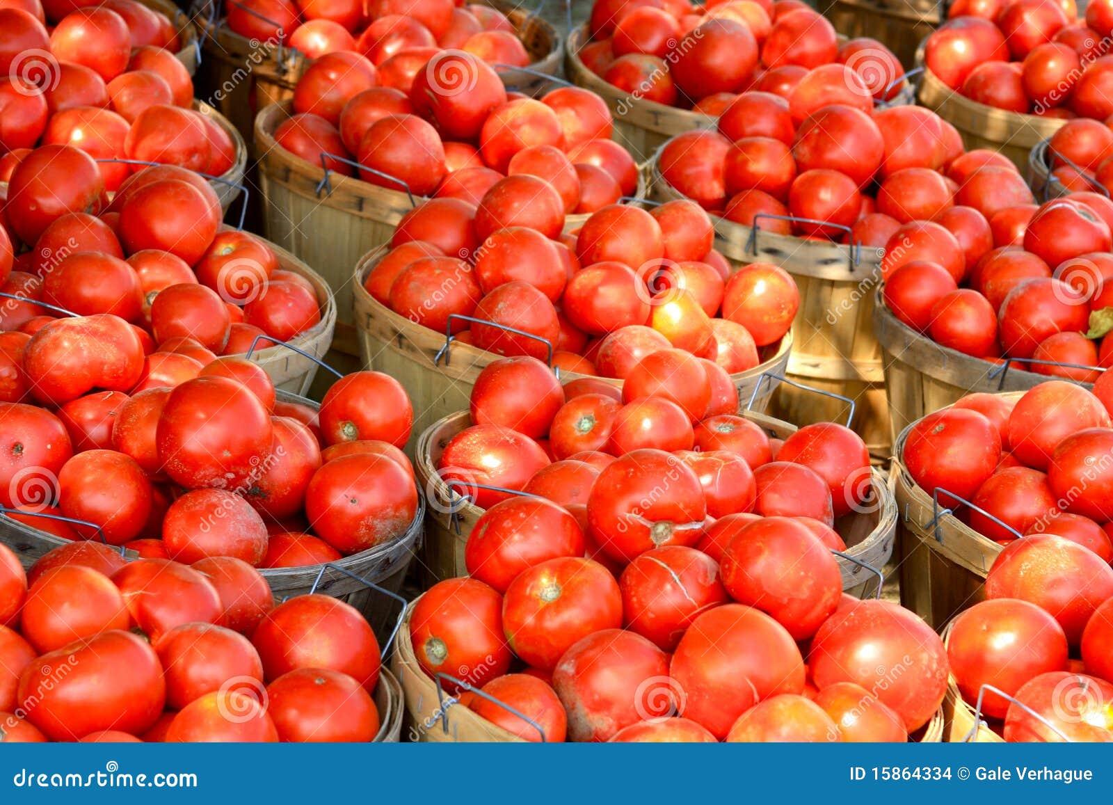 Scheffel Tomaten