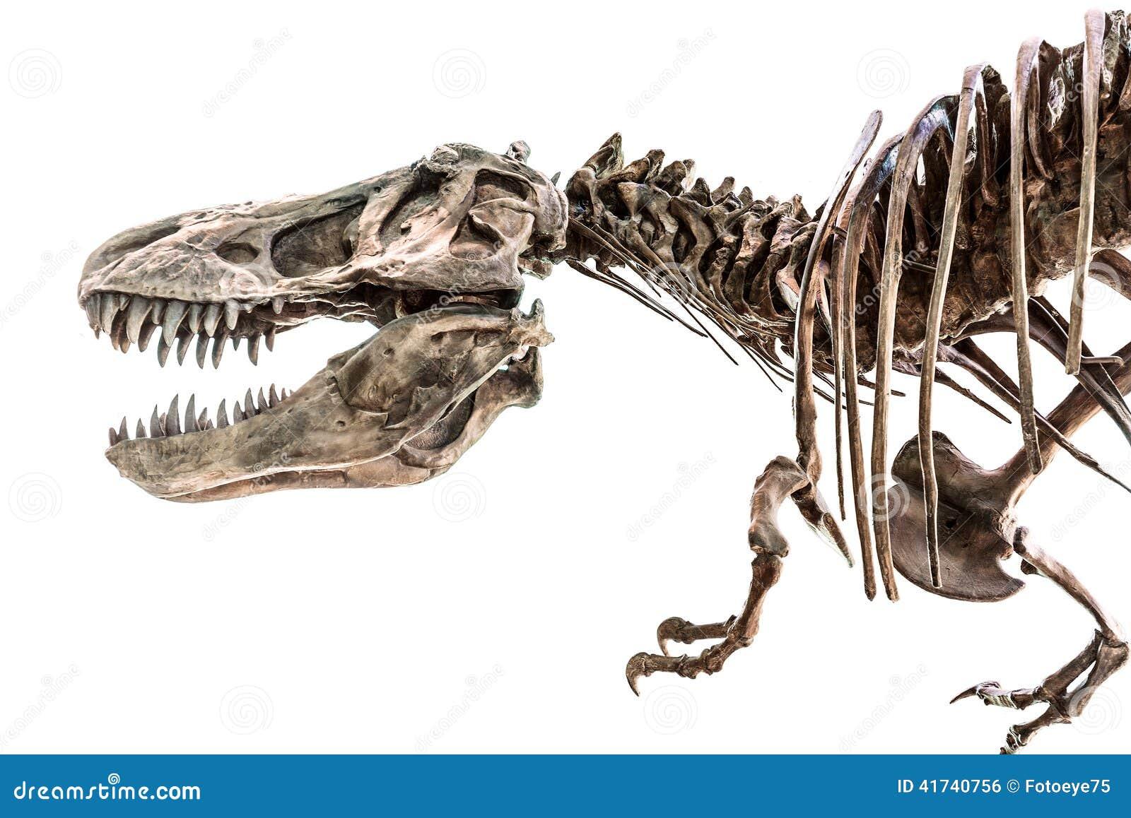 Scheletro Del Dinosauro Di Rex T Rex Di Tirannosauro