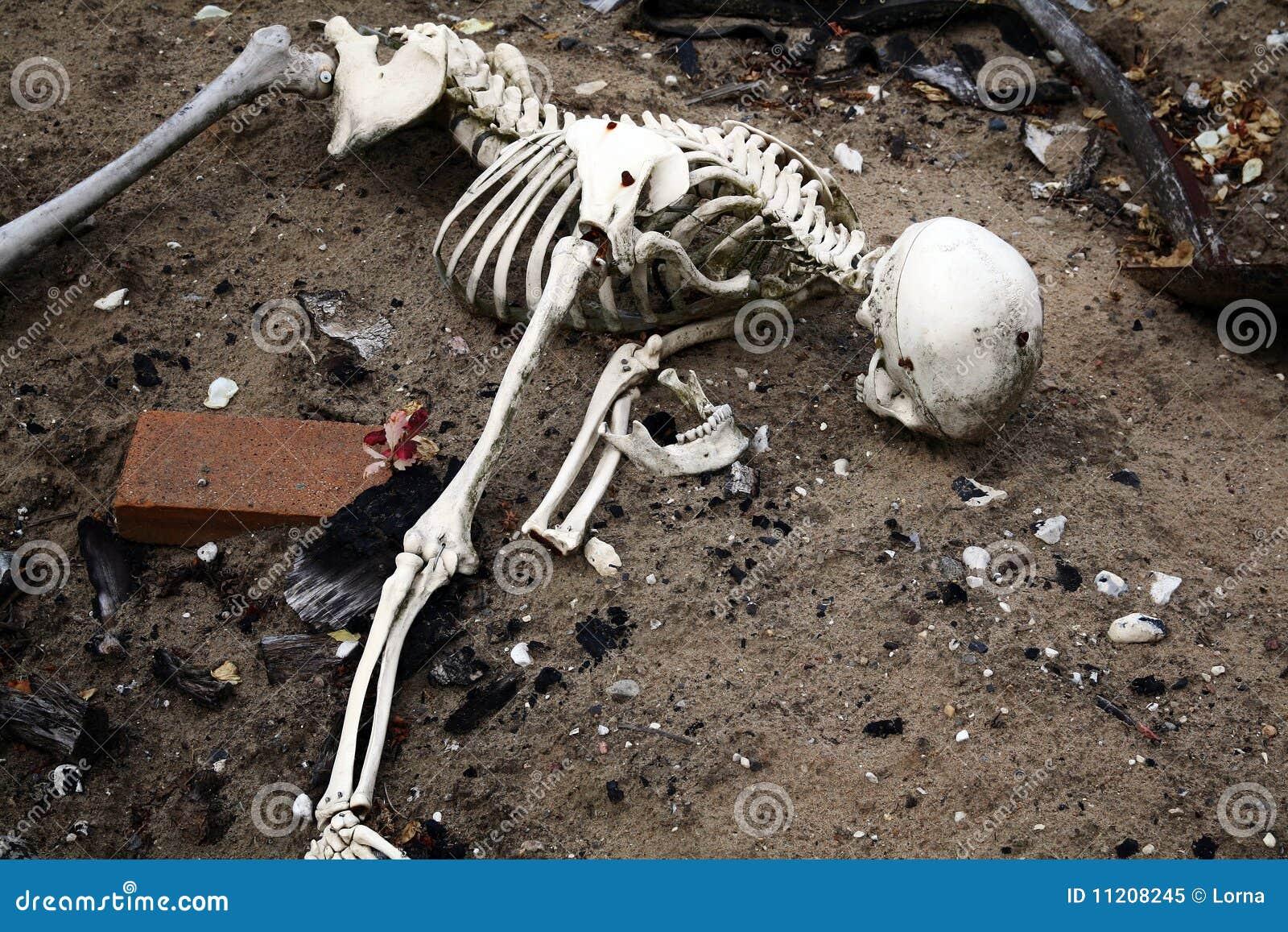Scheletro in sporcizia. ossa e cranio dall uomo guasto