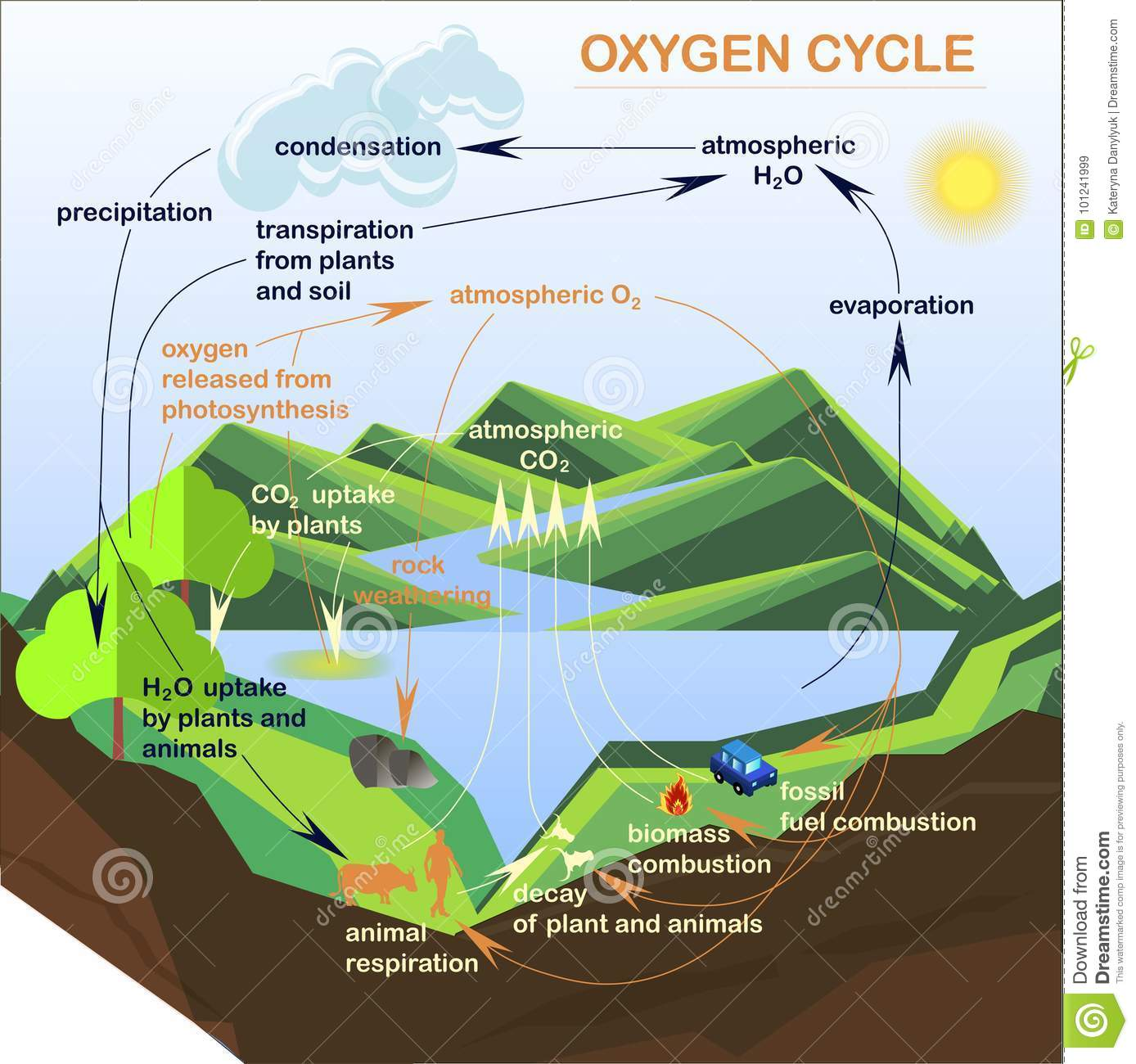 schematic representation of photosynthesis with Vector Scheme Water Cycle Nature on Modelling Approaches To Inform The Control And Management Of Invasive Seaweeds besides Full in addition Diagram Of A Tomato Plant moreover 1364788 furthermore Diagram Soil Types.