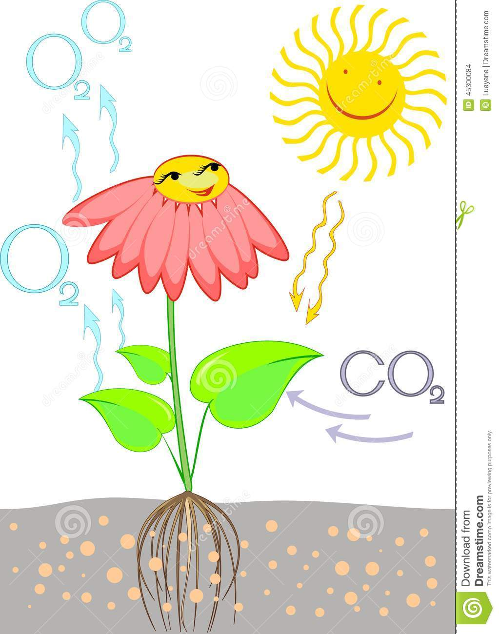 Scheme Of Photosynthesis In Plant Stock Vector - Image: 45300084