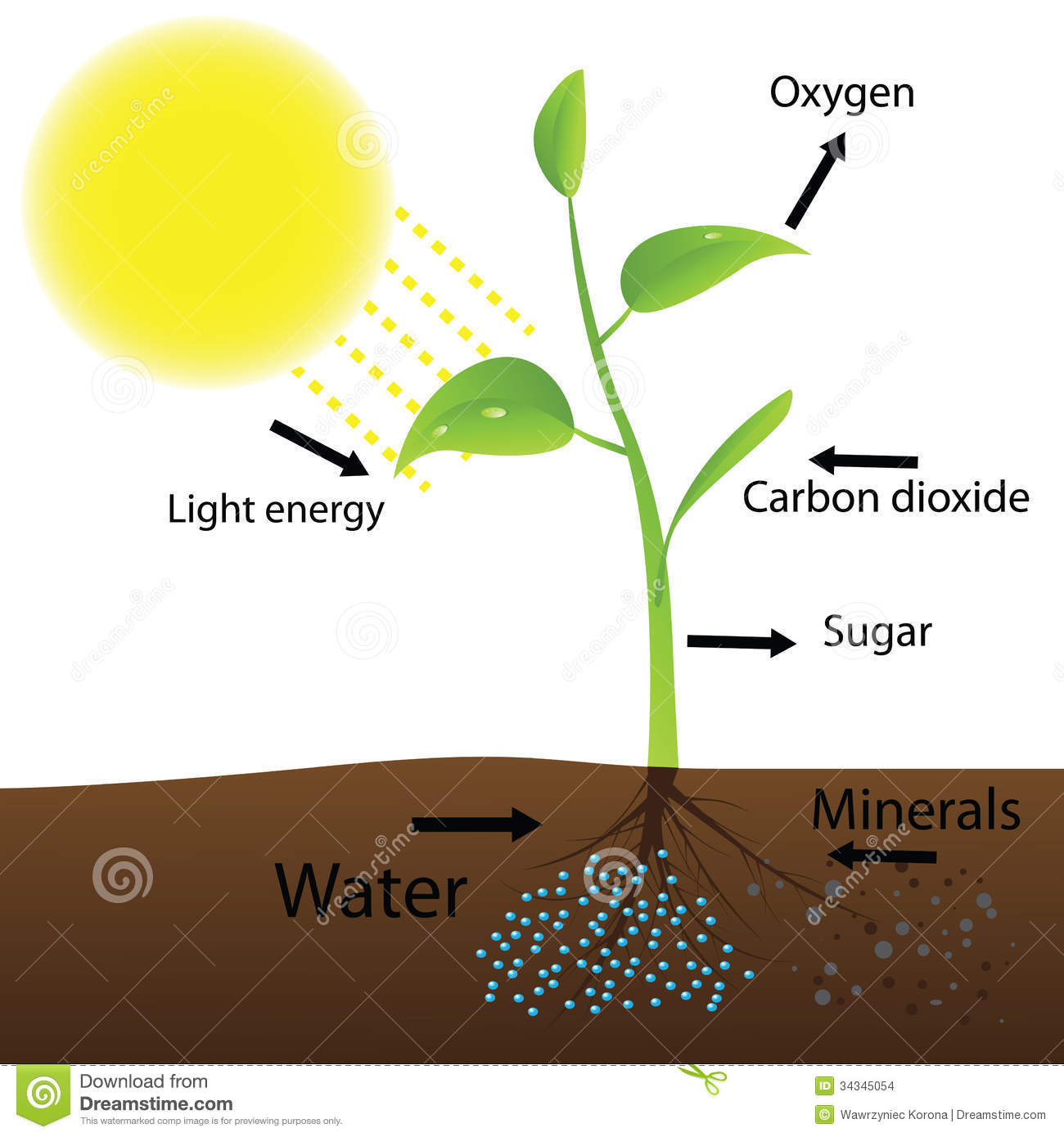 Scheme Of Photosynthesis Stock Images - Image: 34345054