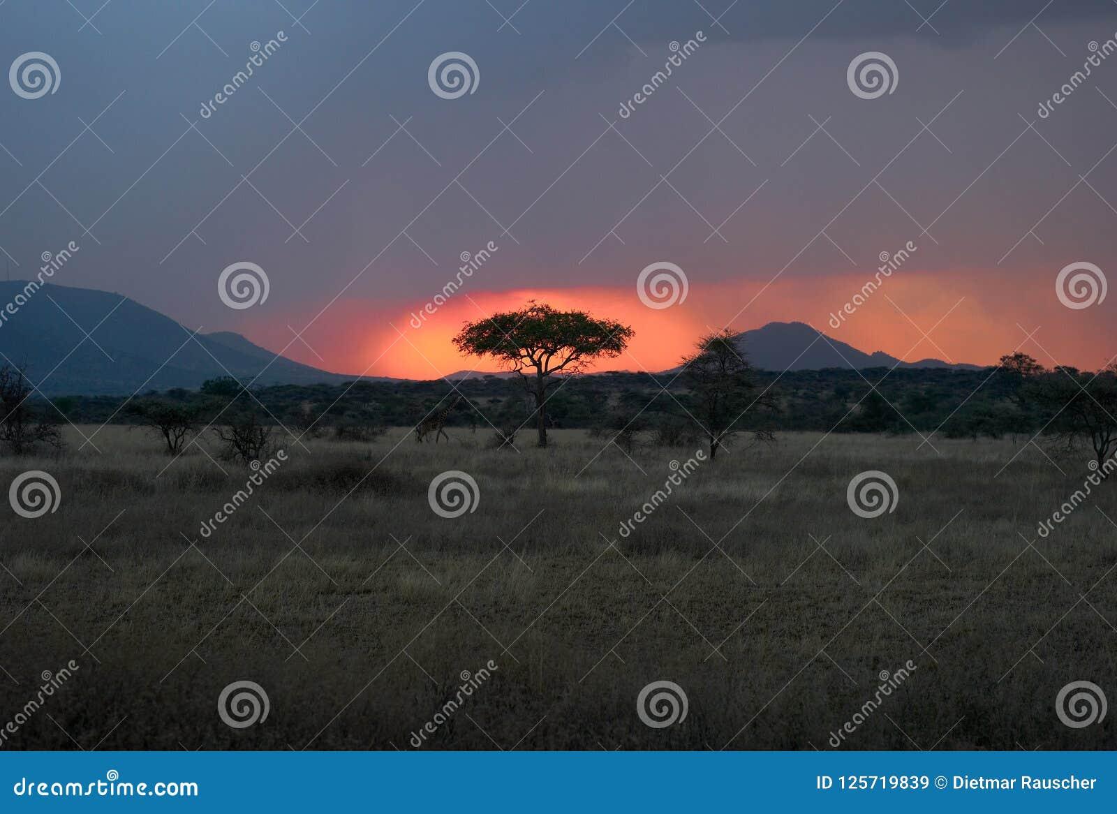 Schemer in Serengeti - Zon die achter een Boom plaatsen