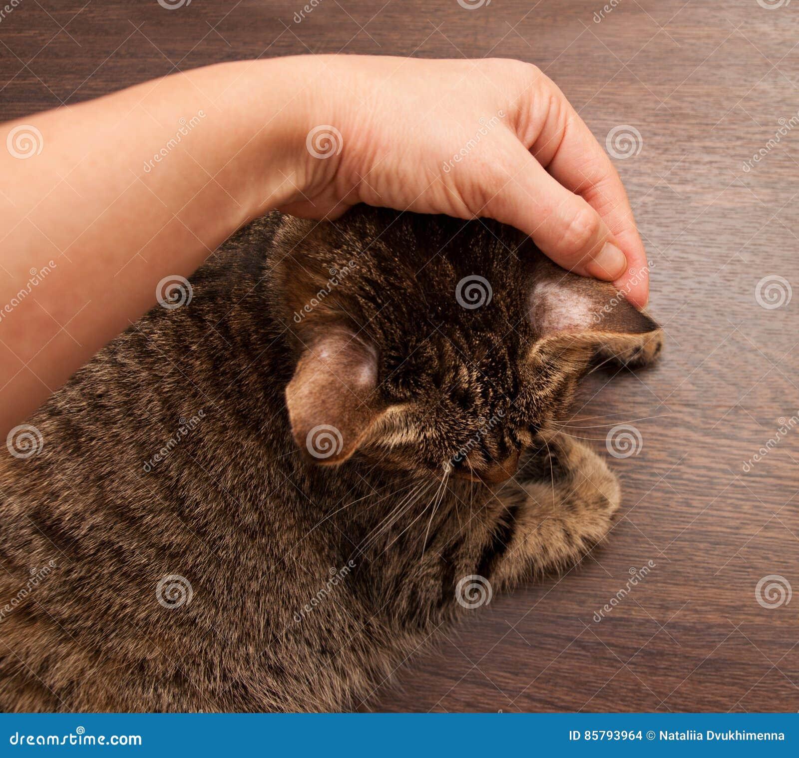 Scherpilzflechte in der Katze