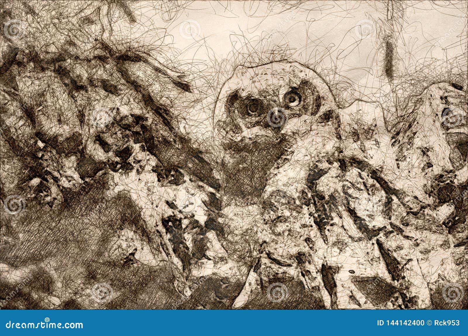 Schets van een Jonge Jonge uil die Direct Oogcontact van Zijn Nest opnemen
