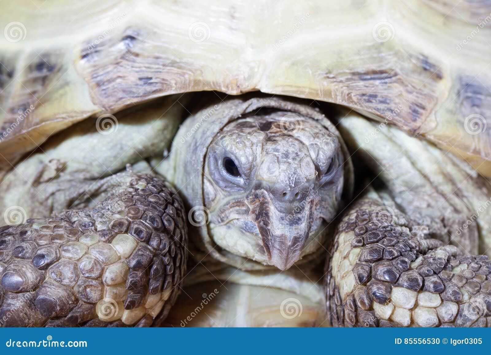 Schildkröte auf dem hölzernen Schreibtisch