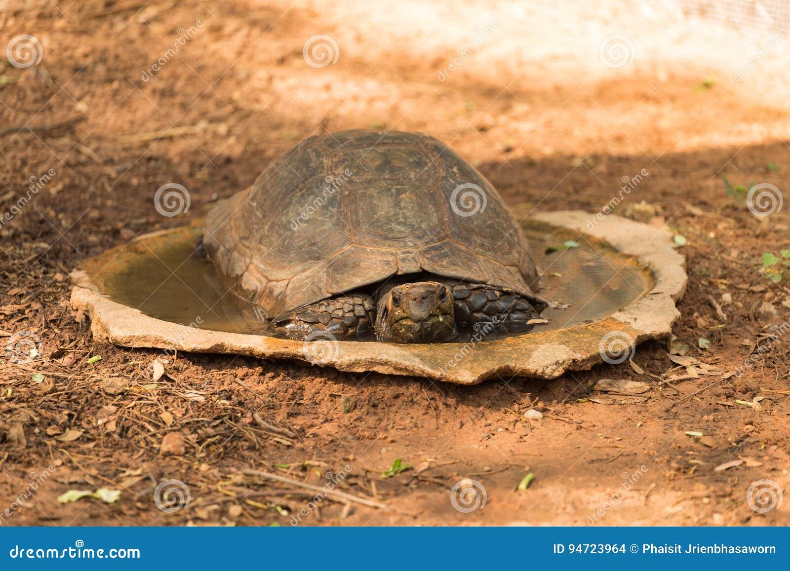 Schildkrote Schlaft Stockfoto Bild Von Reptil Schildkrote 94723964