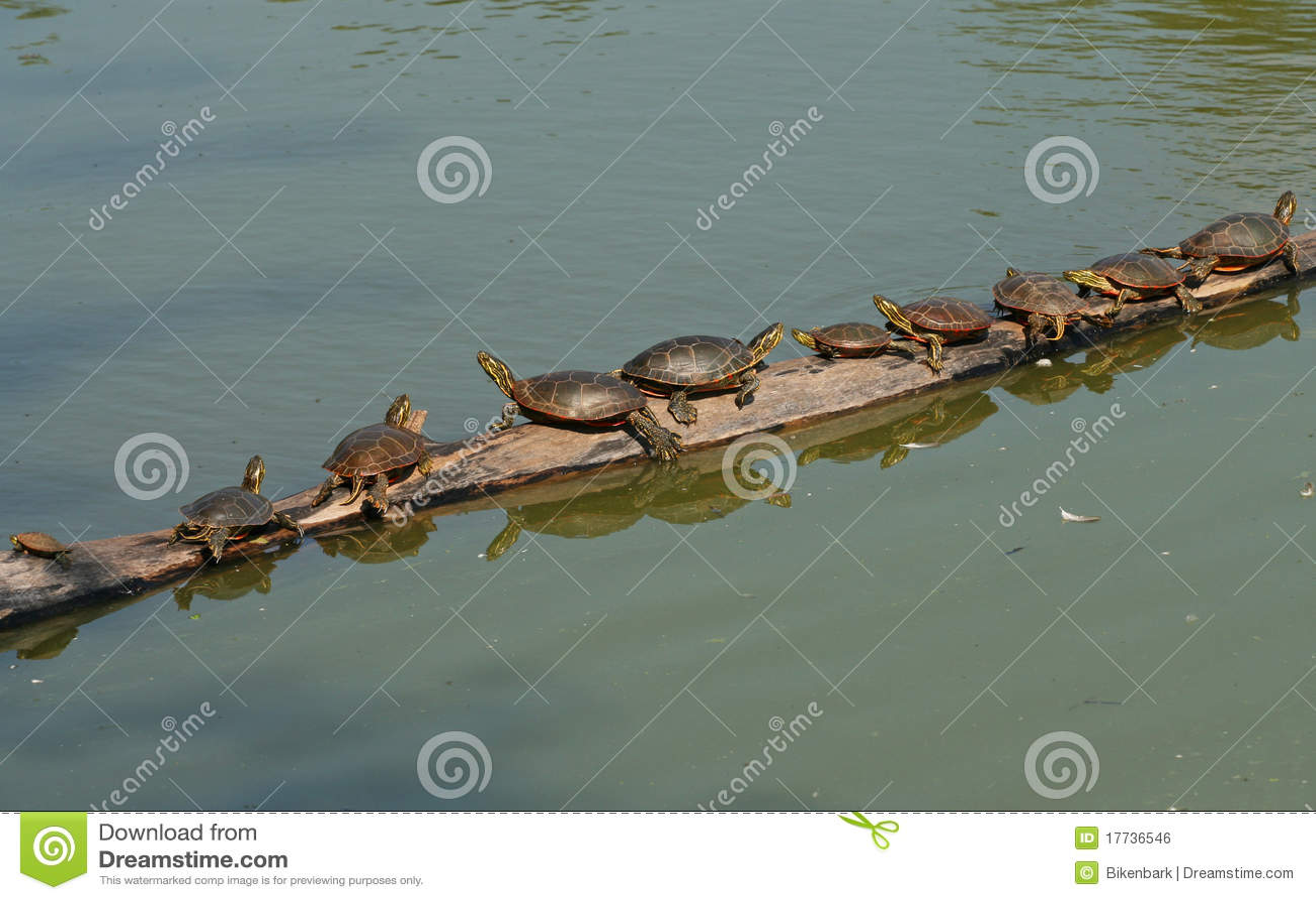 Schildkröten auf einem Protokoll