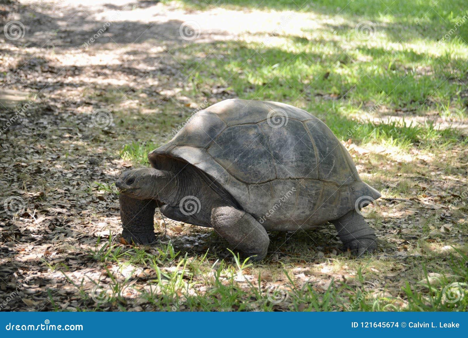 Schildpad in de wildernis