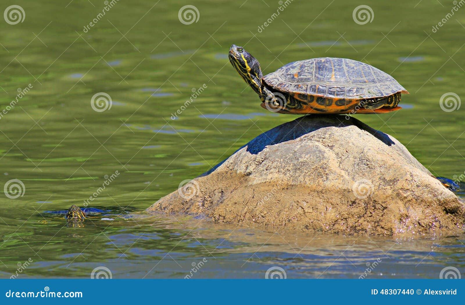 Schildpad Die Yoga Doen Die De Uiteindelijke Betekenis Van