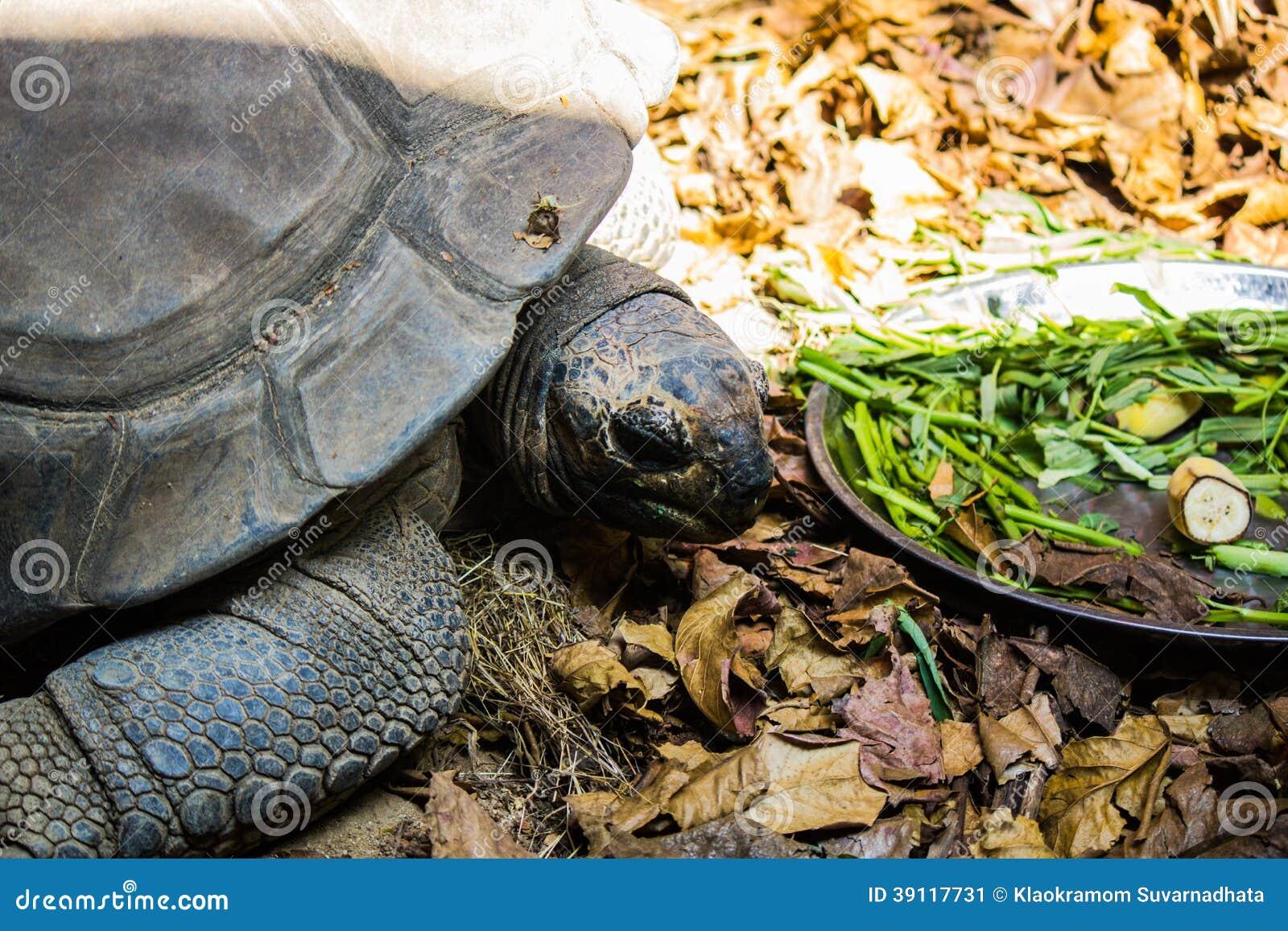Schildpadden in Bangkok