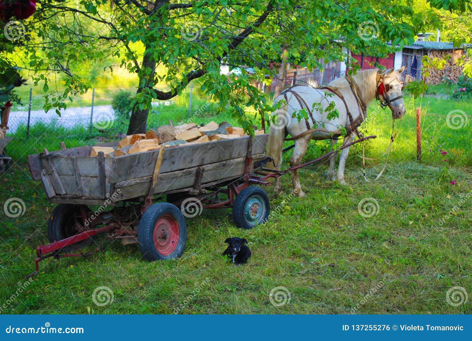 Schimmel mit altem hölzernem Auto in Jelova-gora Berg in Serbien
